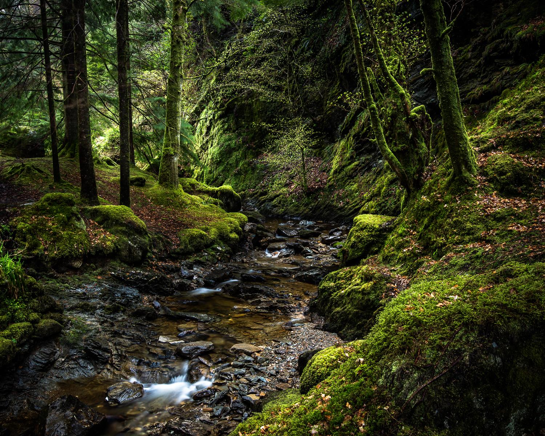 Deep Dark Wood.jpg