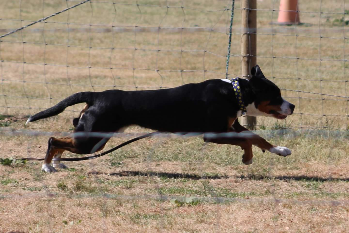 Collins earning the first leg towards his Herding Capability Tested (HCT) title.