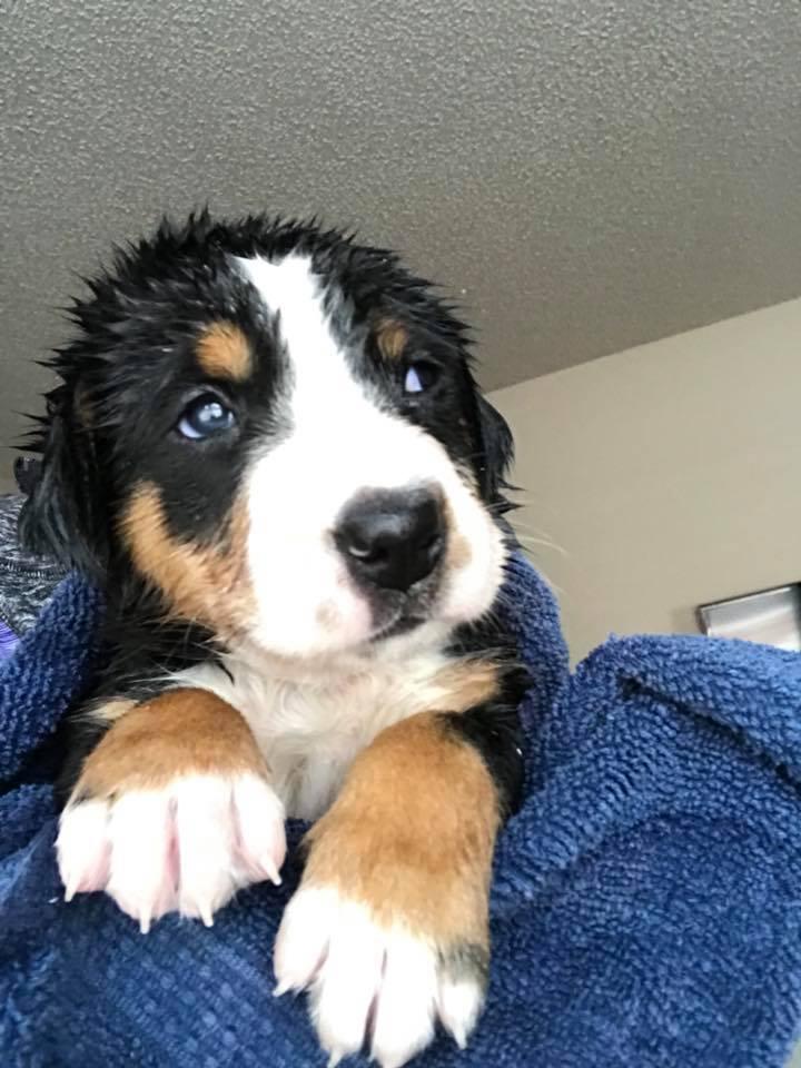 new puppy1.jpg