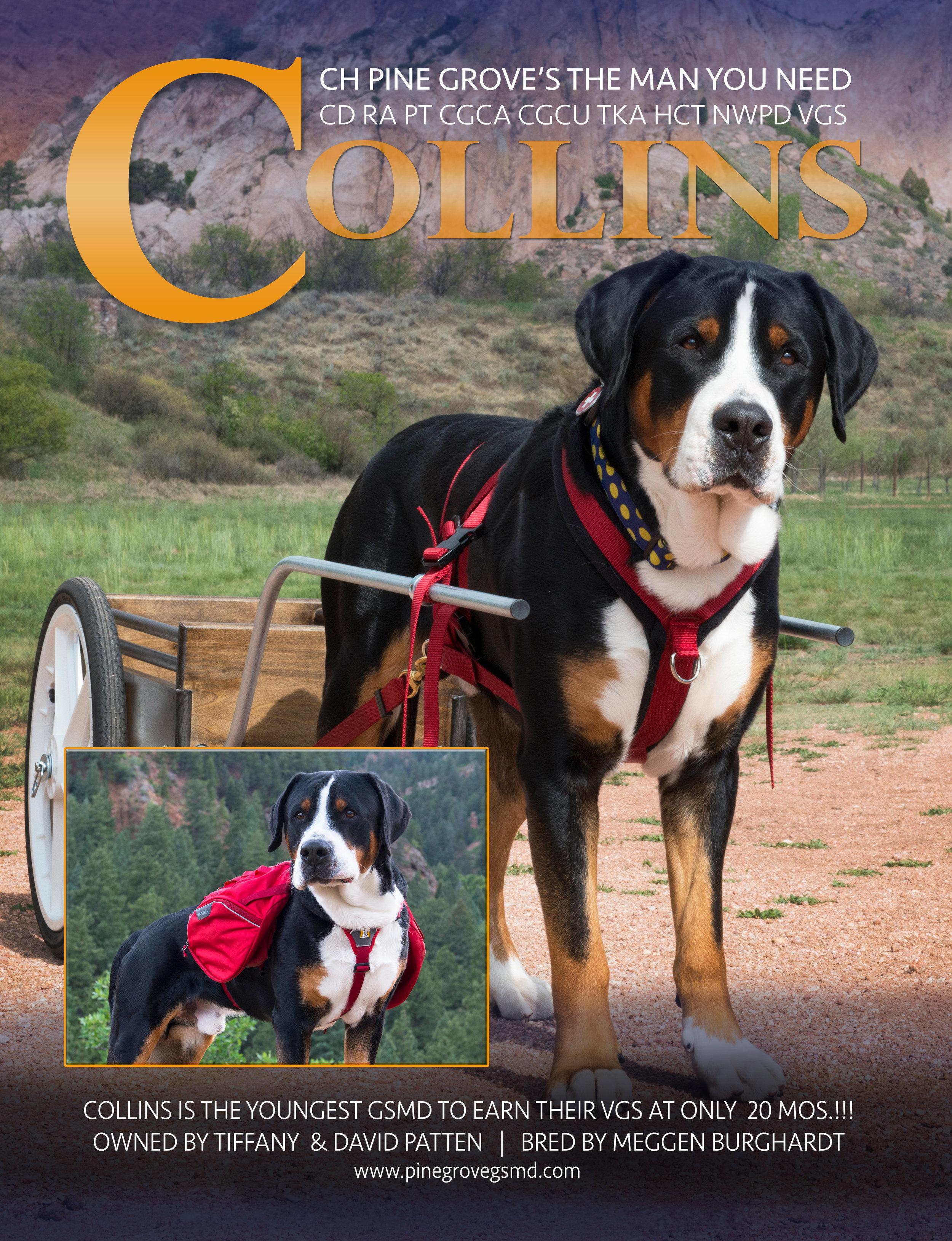 CollinsAD3.jpg