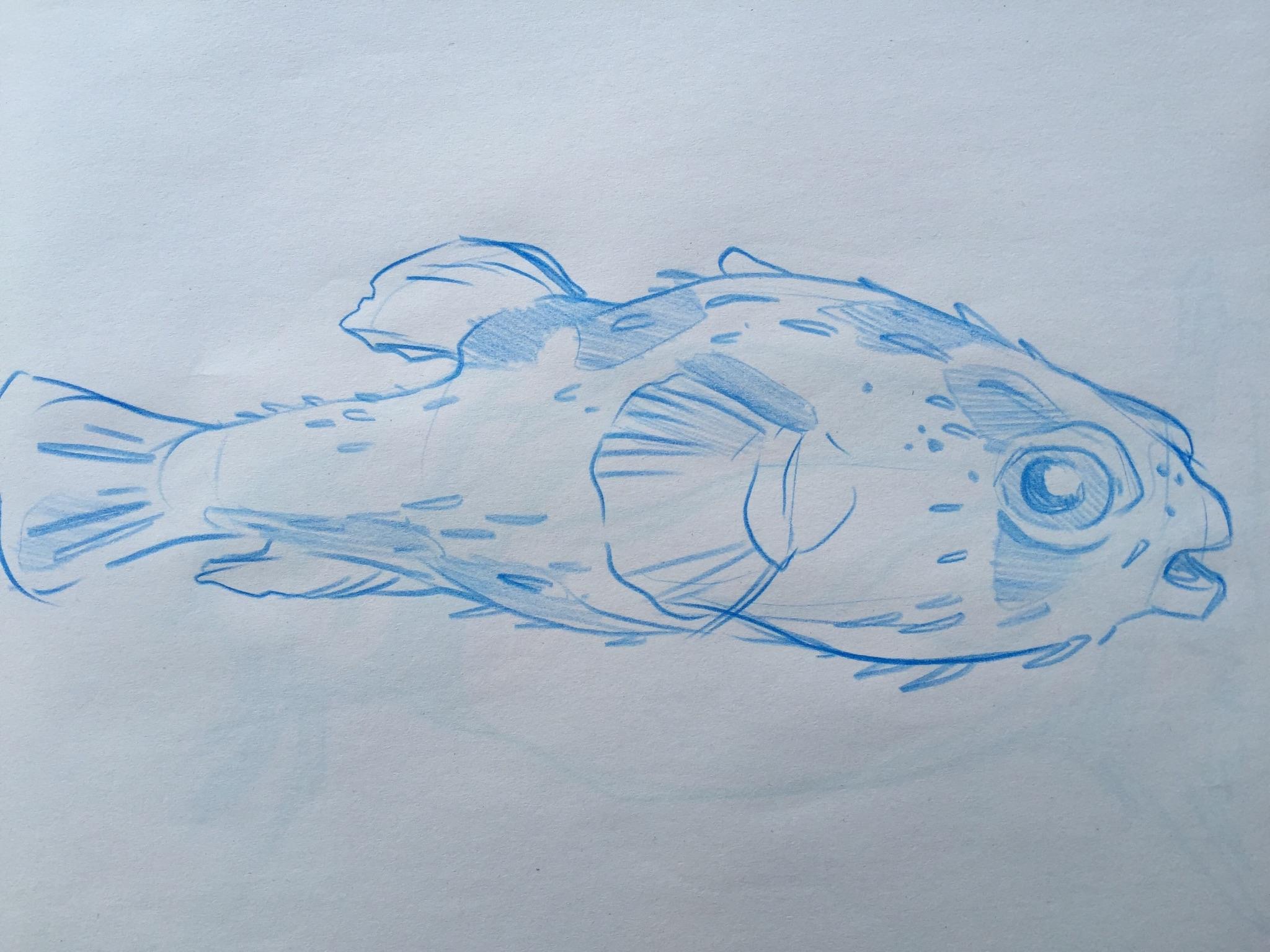 pufferfish sketch.jpg