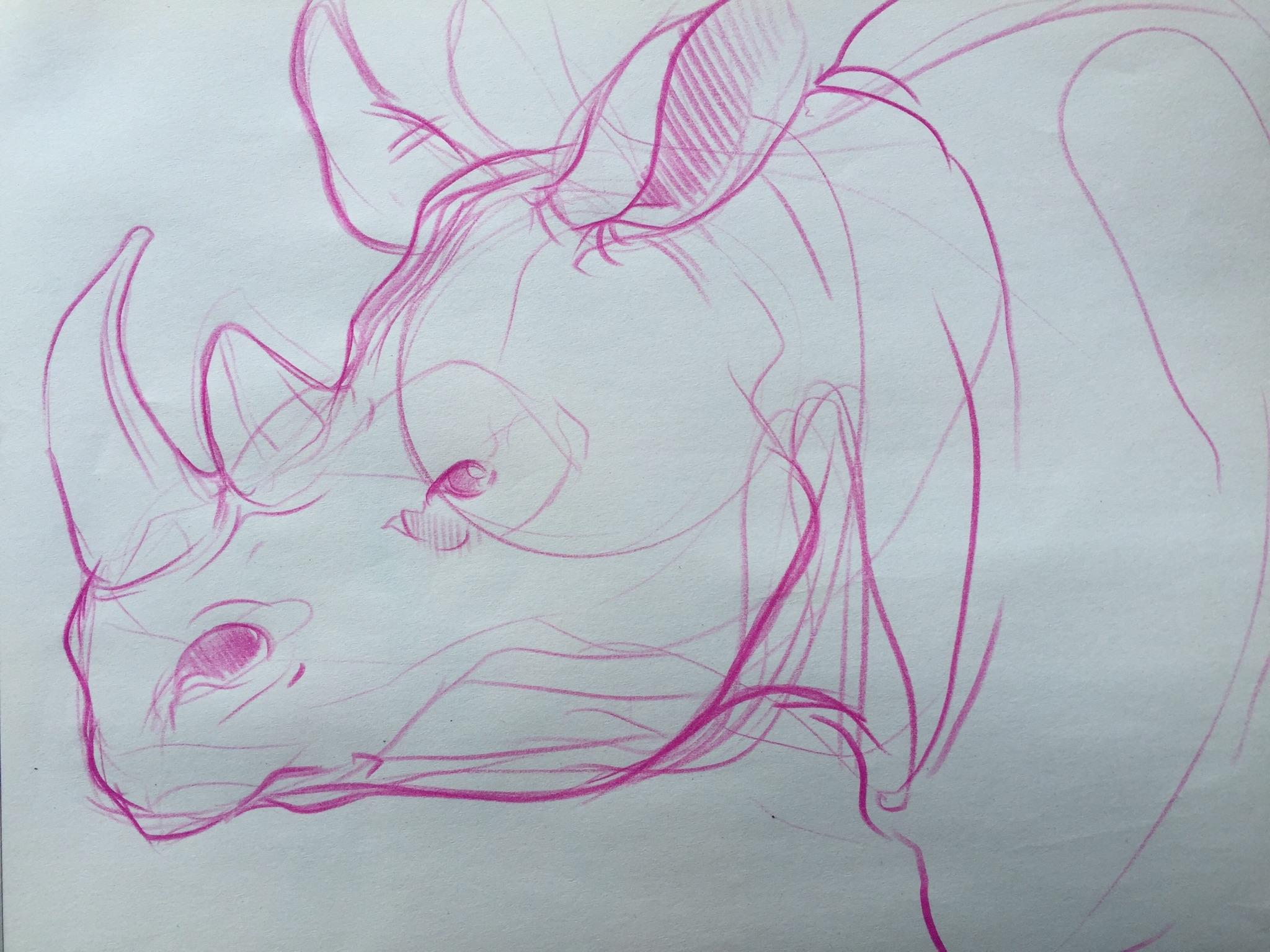 rhino sketch.jpg