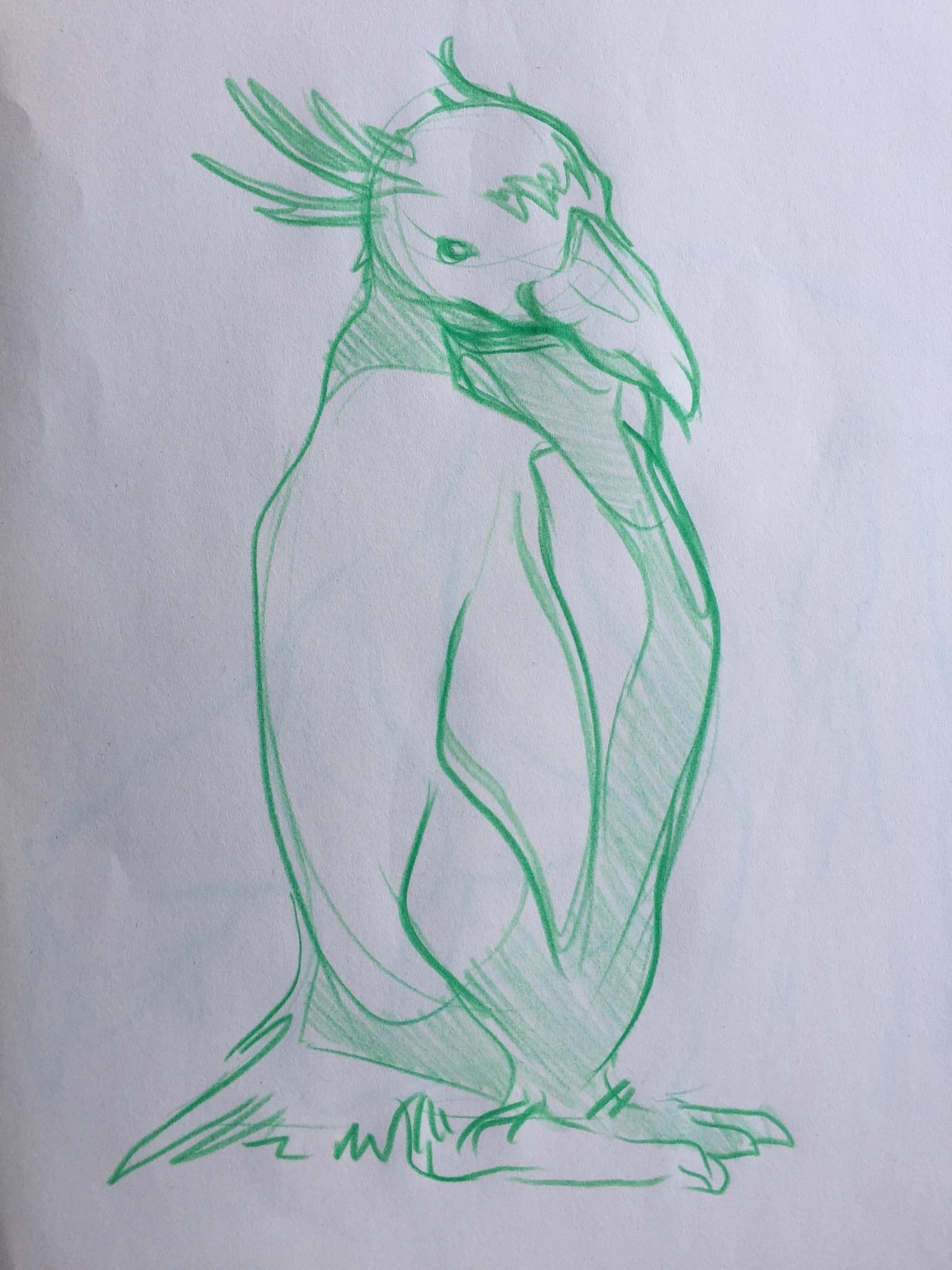 penguin sketch.jpg