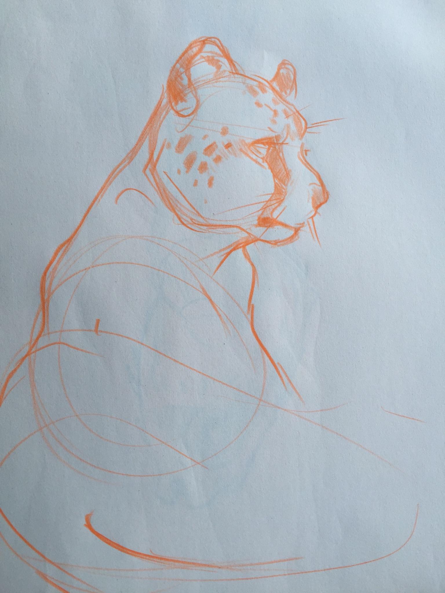 cheetah sketch.jpg