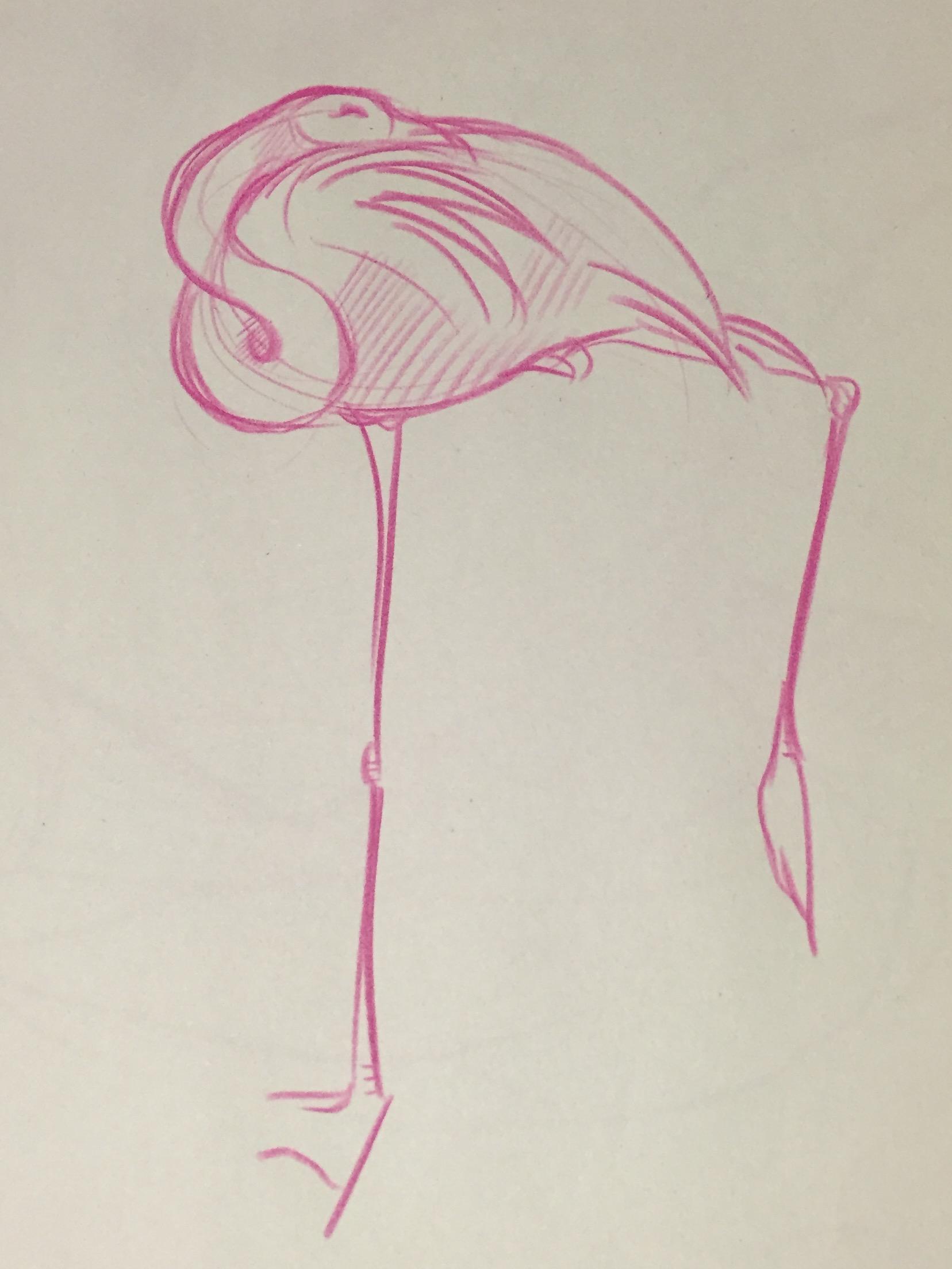 flamingo sketch.JPG