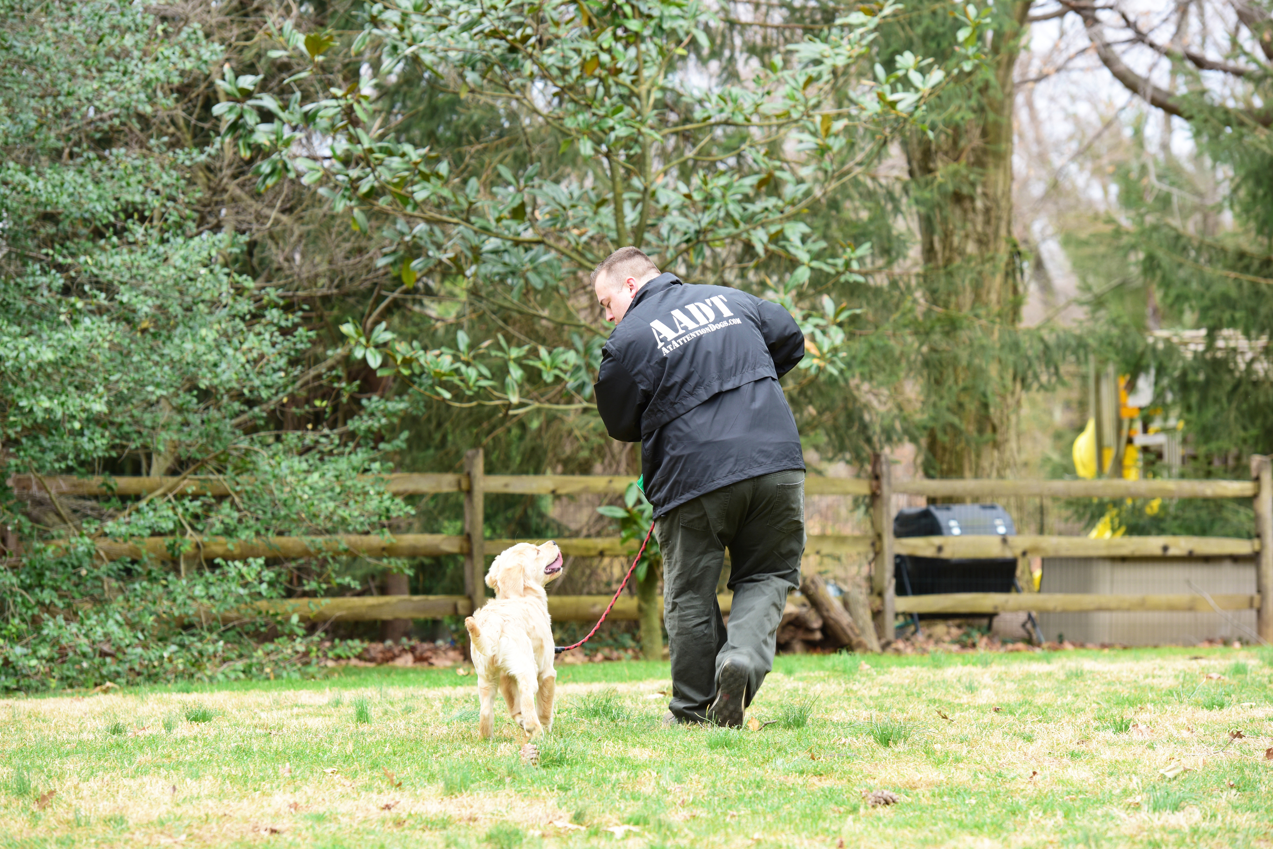 Dog Trainer, Gladwyne, Main Line, Positive, At Attention Dog Training - 2