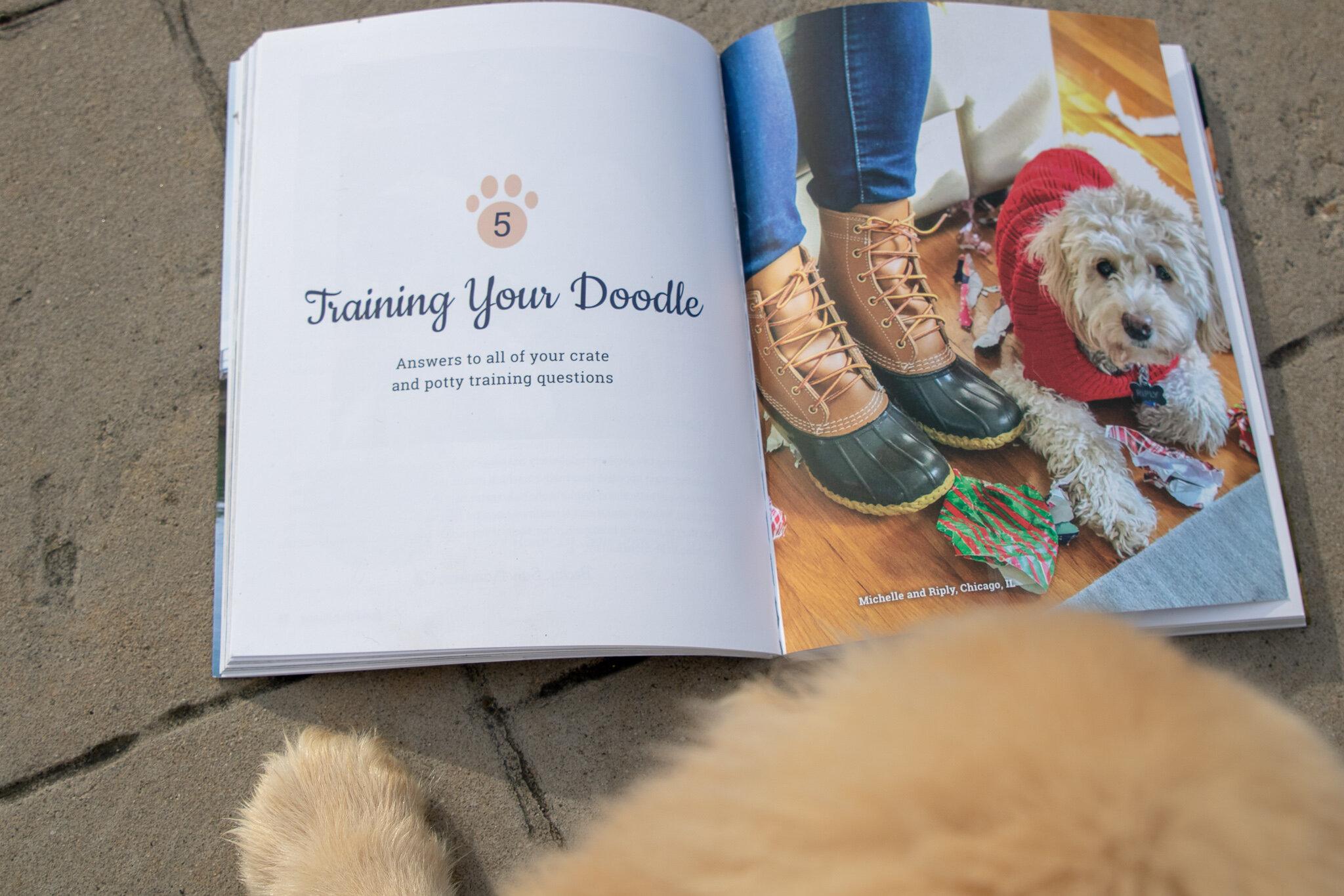 """""""Training Your Doodle"""" – Raising a Doodle"""