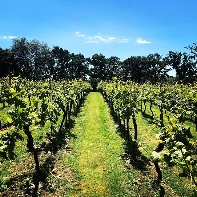 Summer feels like it's here!#new forest #summer #englishwines #winegb #goodyear #hampshire