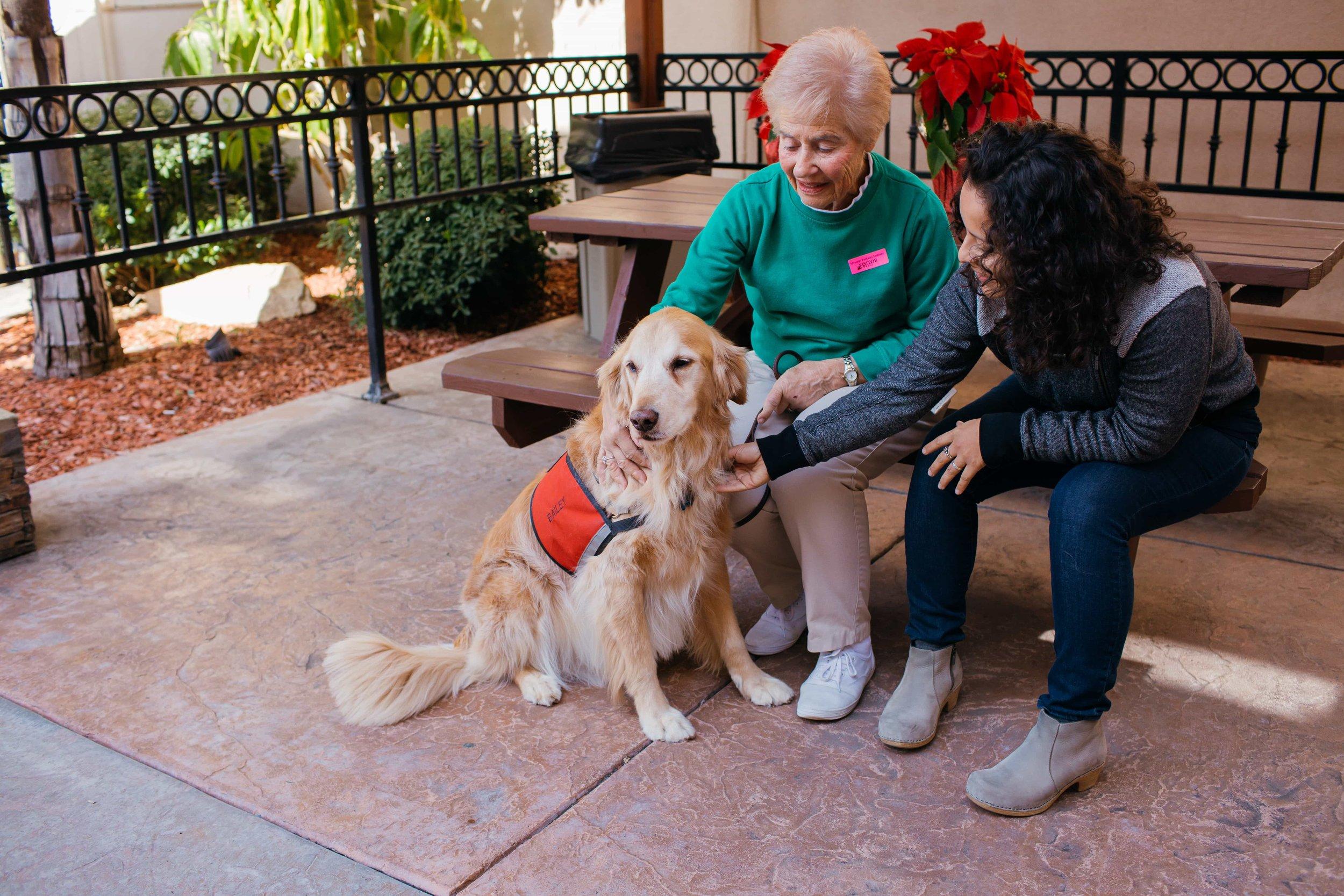 dog to help manage stress