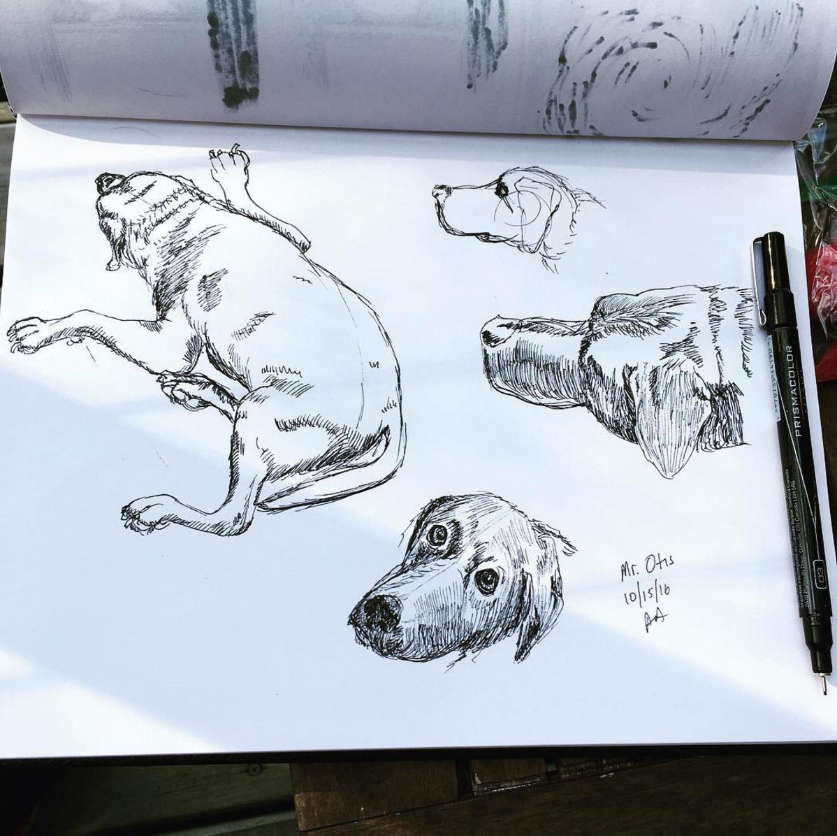 Sketches of Mr. Otis, the black lab that I was dogsitting this week!