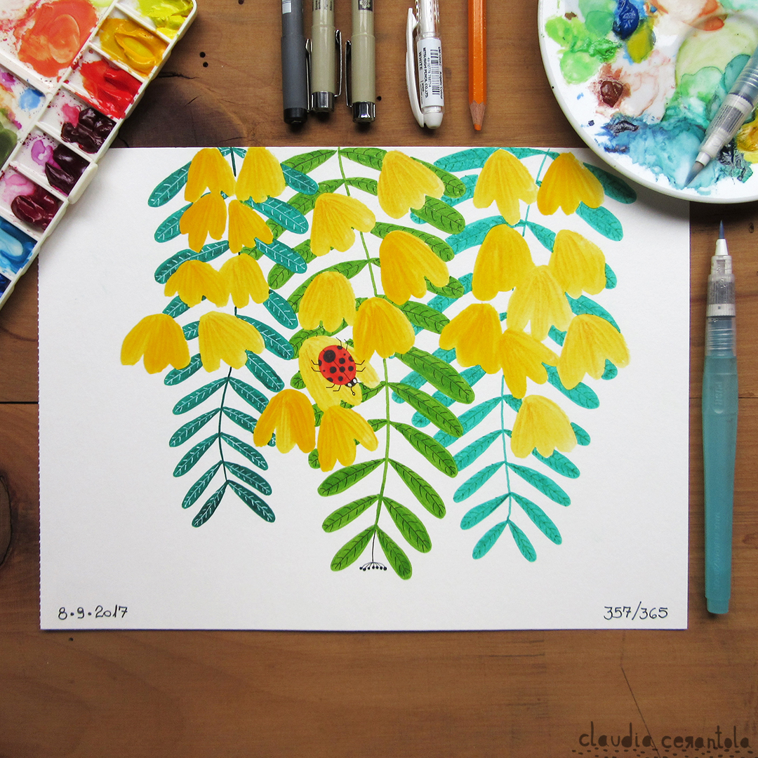 claudia-cerantola-araucaria-357.jpg