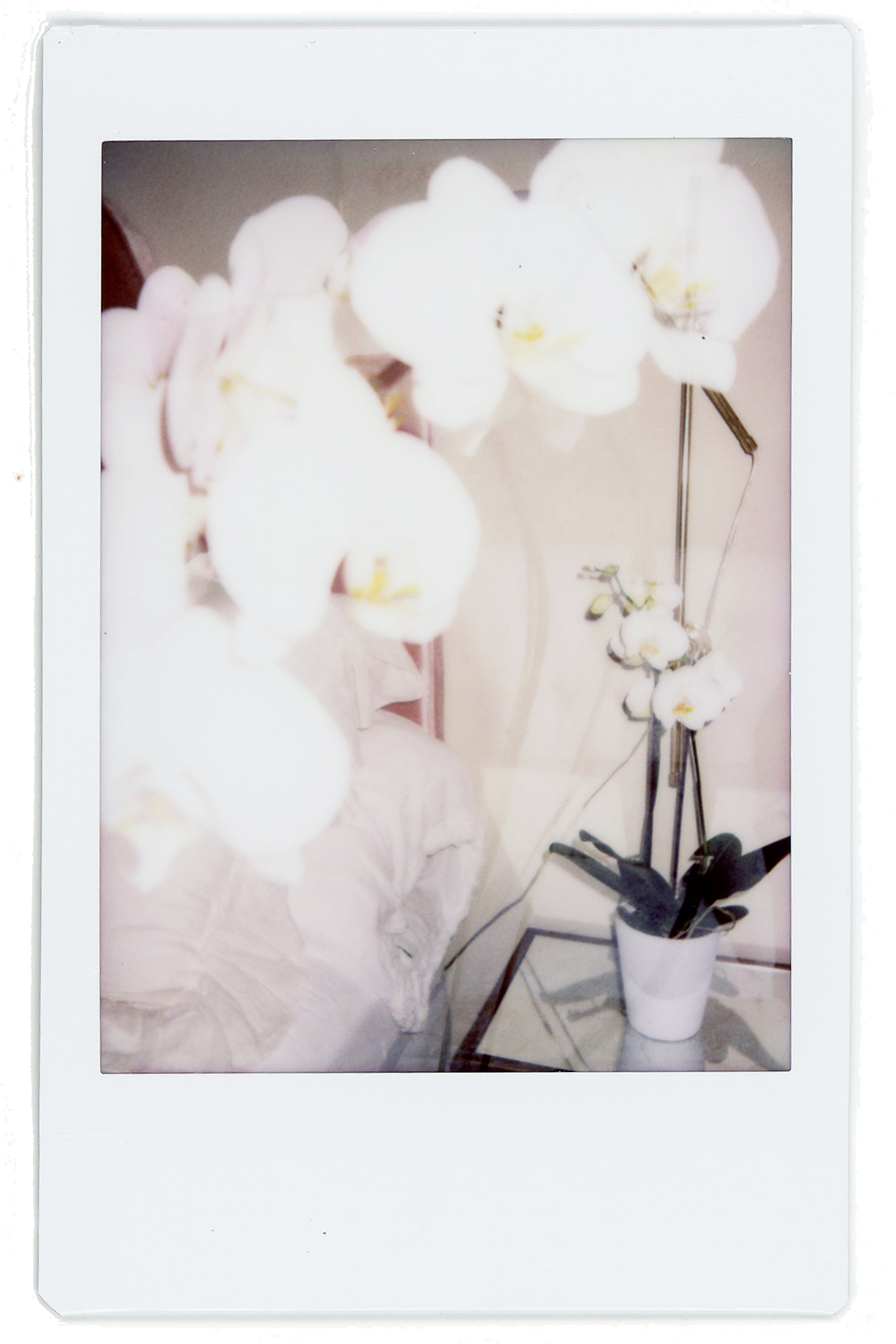 polaroids // orchid double exposure