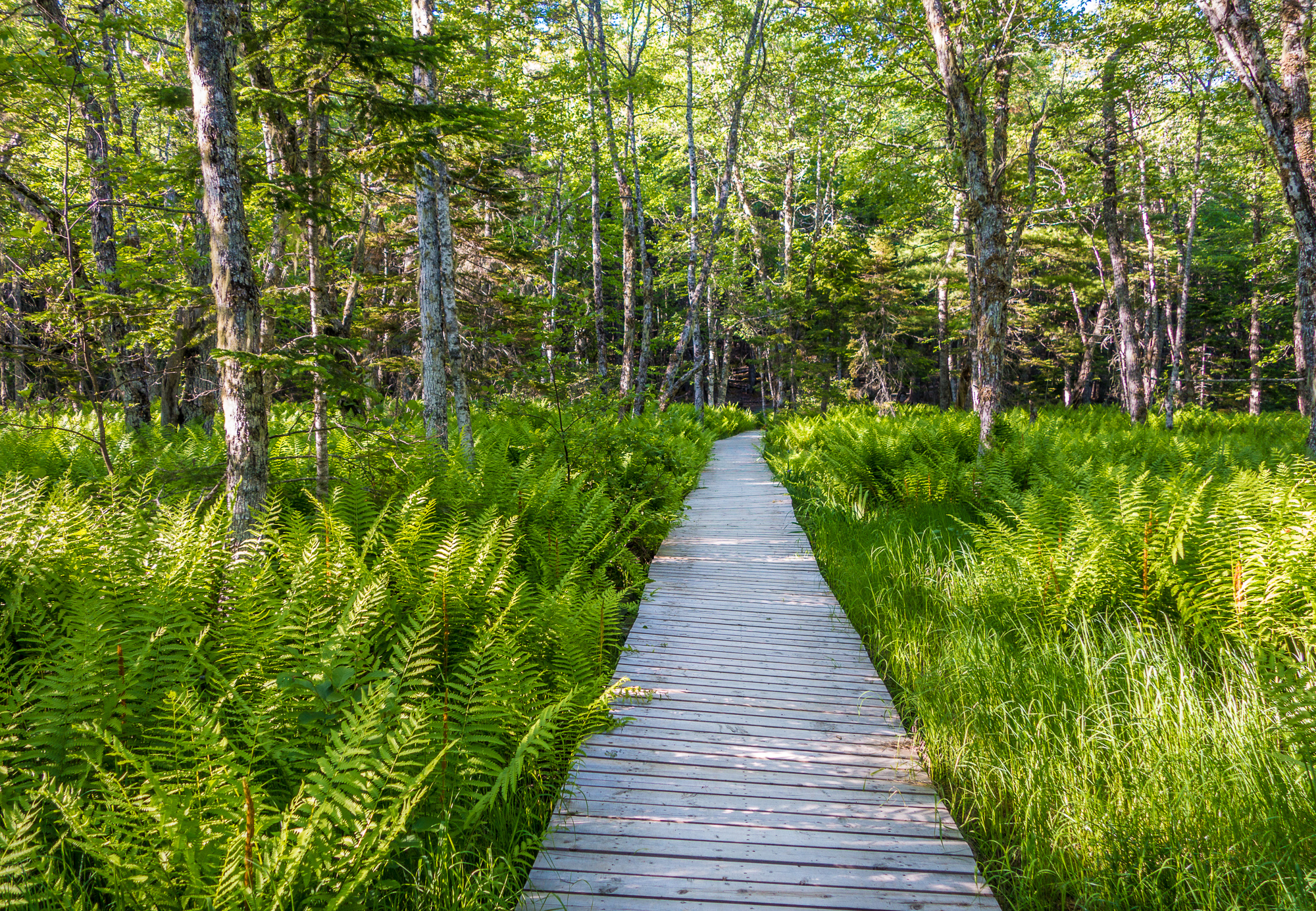 Kejimkujik National Park, Nova Scotia