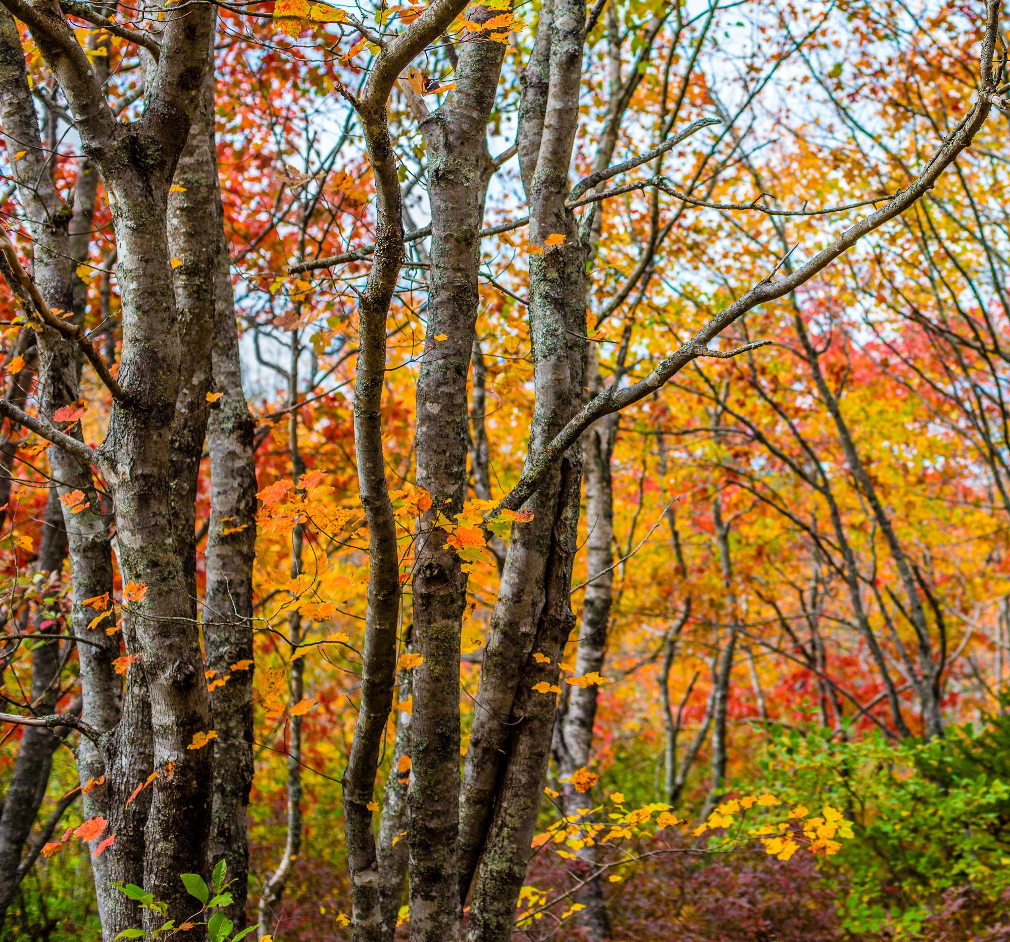 Bluff Wilderness Trail, Halifax Nova Scotia