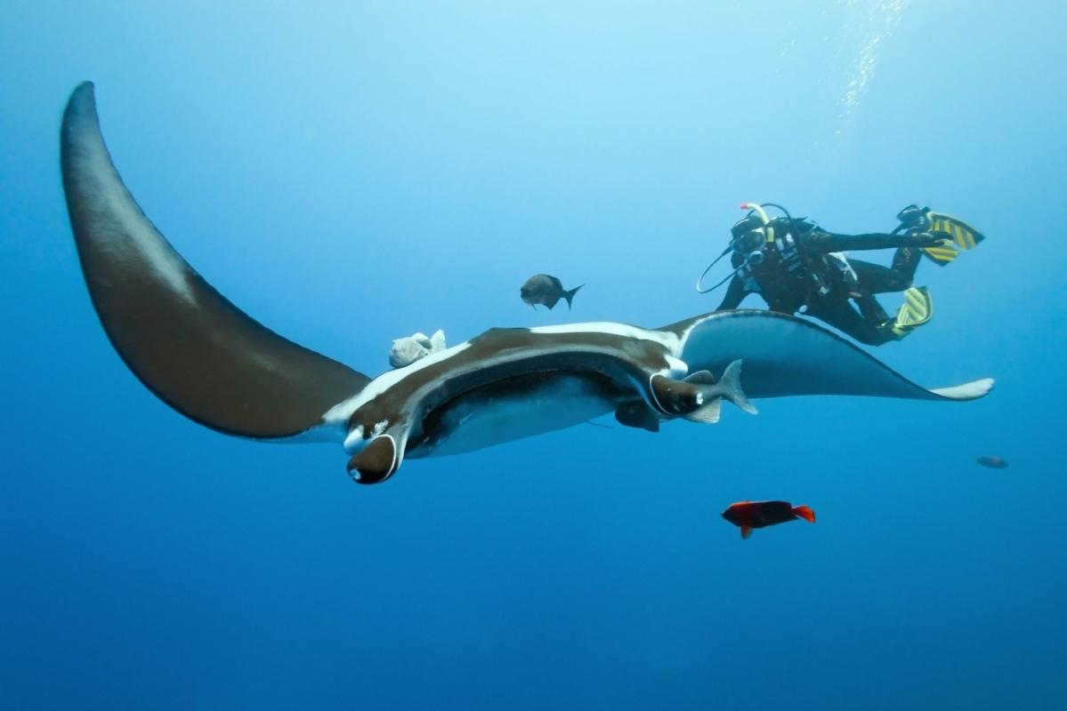 UIY_Nyaman_e3_Diving at Manta Point.jpg