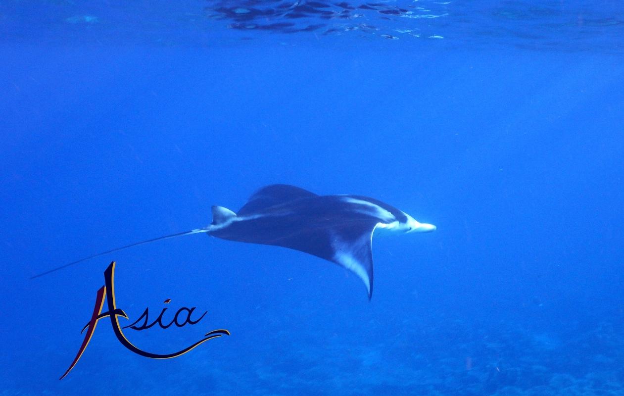 UY_Asia_new_08.jpg