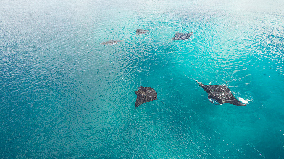 manta-rays-komodo-islands.jpg
