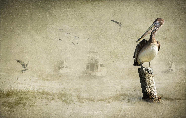 Pelican Fleet