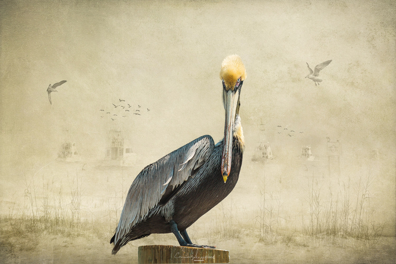 Pelican Shore.jpg