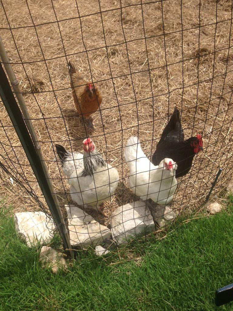 Olivia Restaurant Austin - Chicken Coop