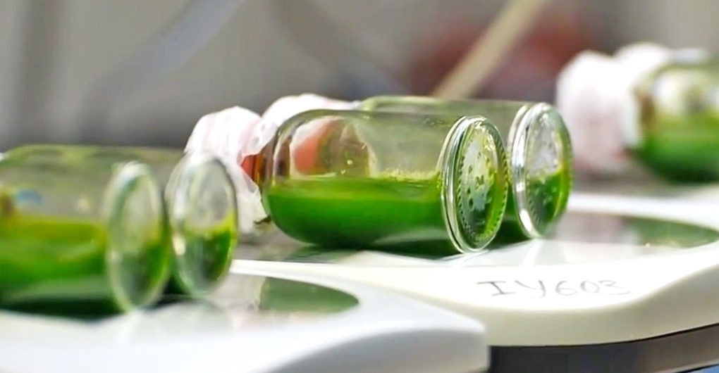 Algae in the Lab