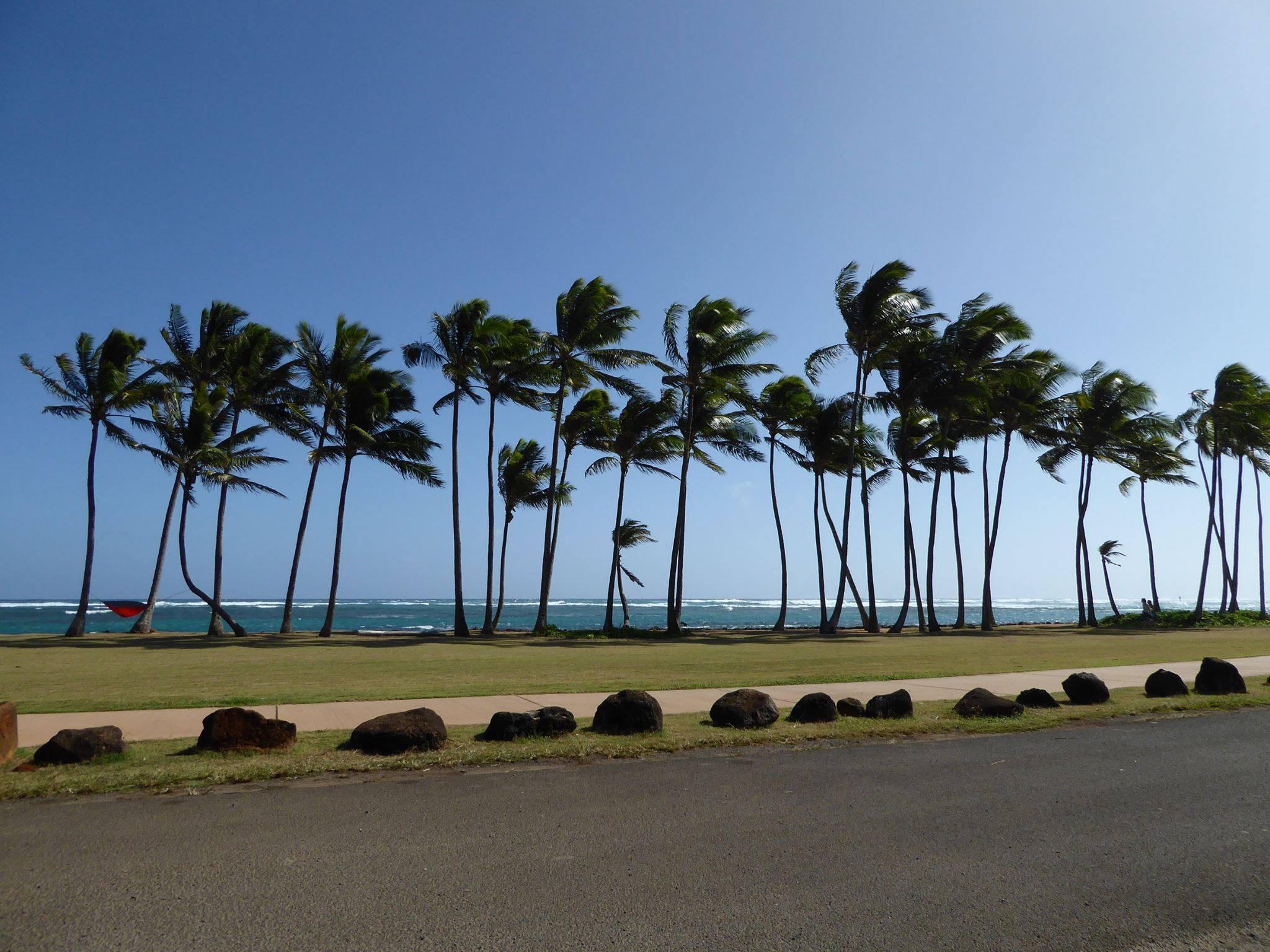 Multiple blowing palms in the wind 2.jpg