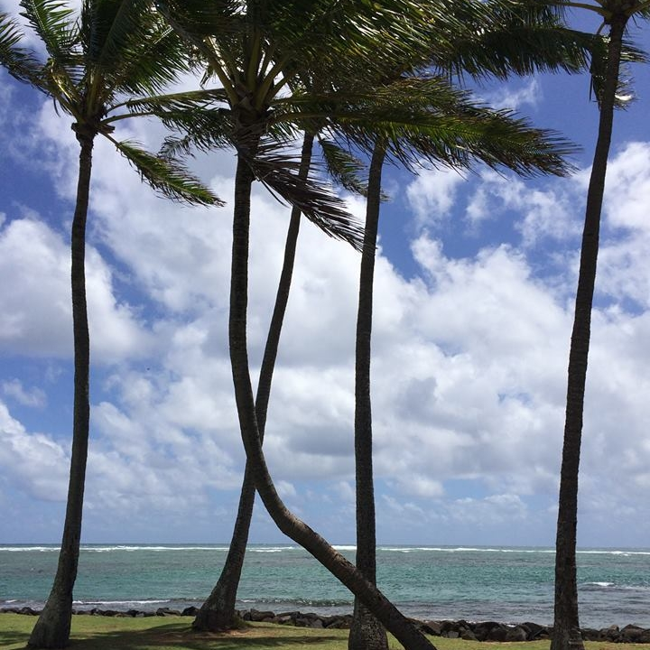 Blue Sky Palm Tree.jpg
