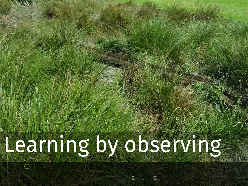20150102 0059 Learning by observing.jpg