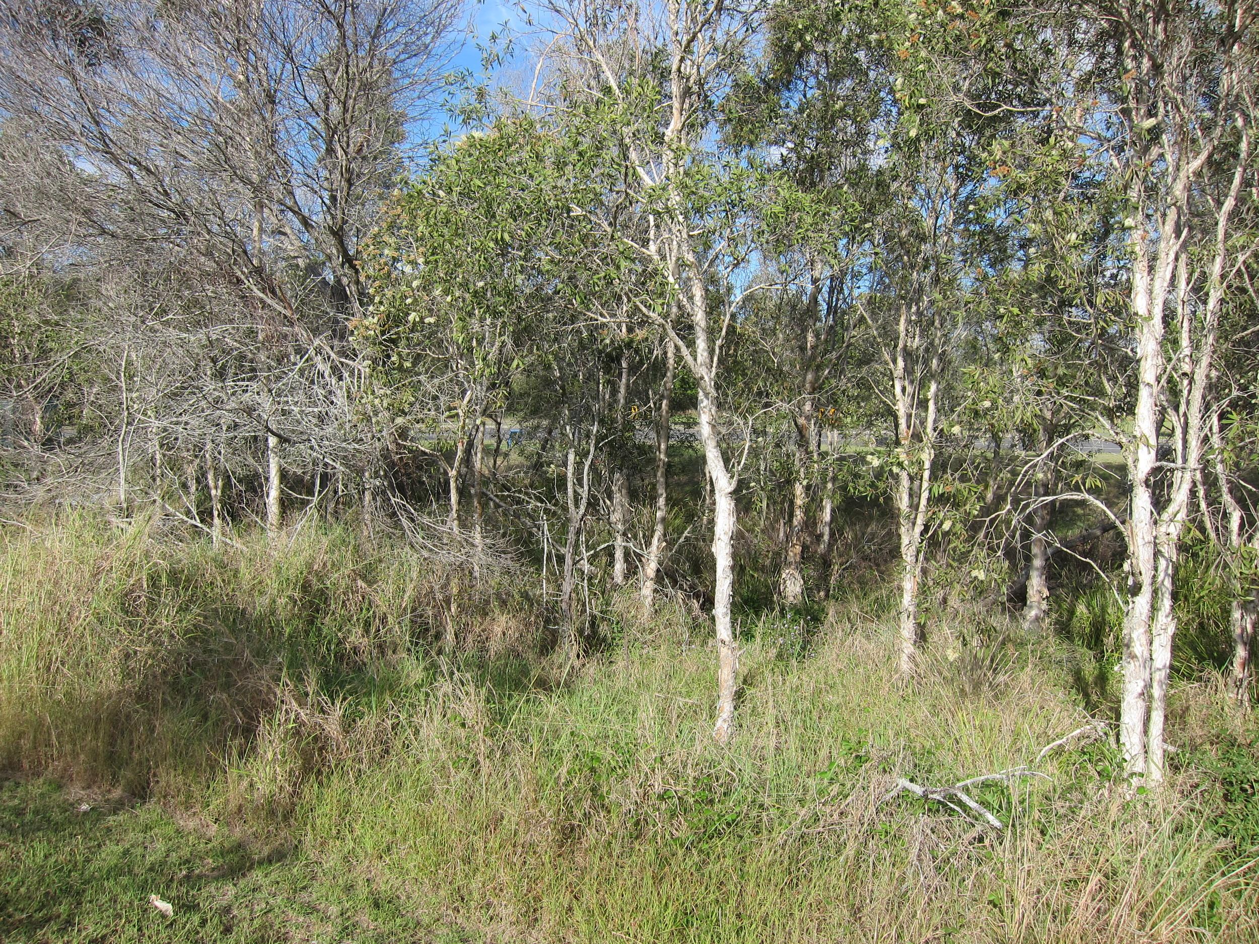 Hoyland St Bioretention System