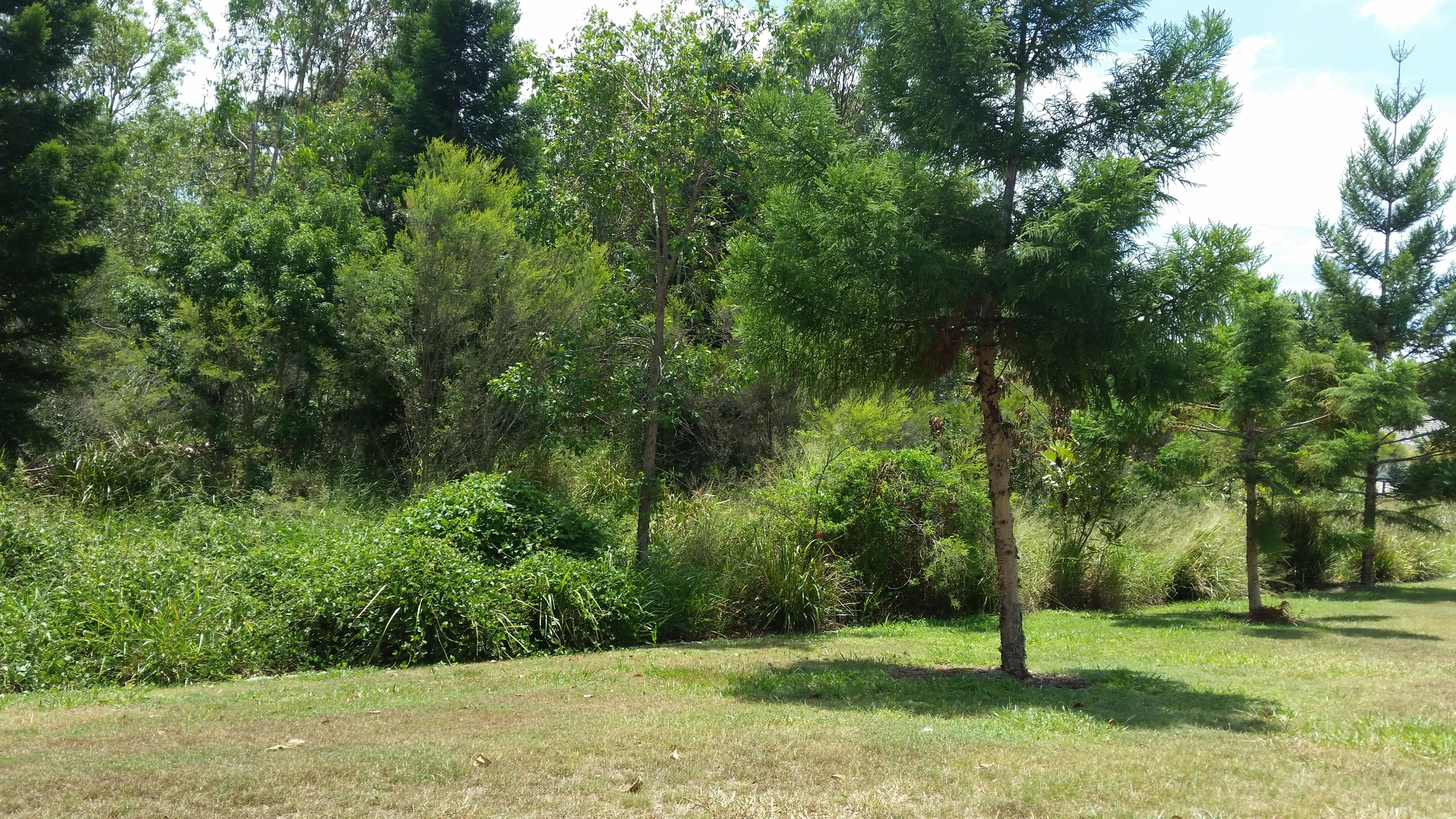 Lancewood Place Bioretention System