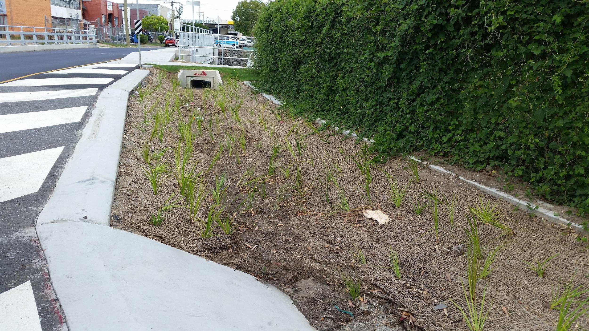 Moorley St Bioretention System