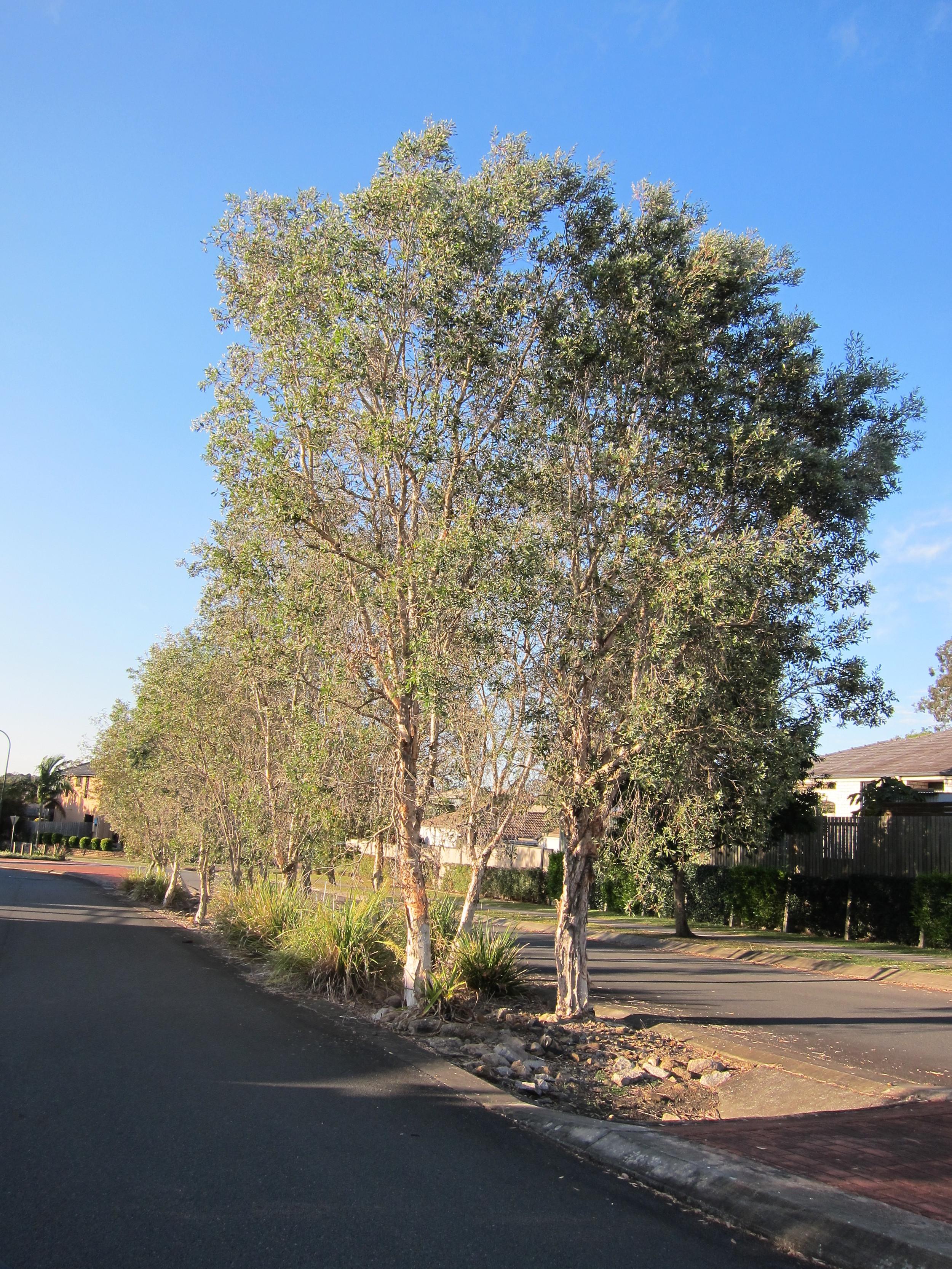 Toorak St Bioretention System