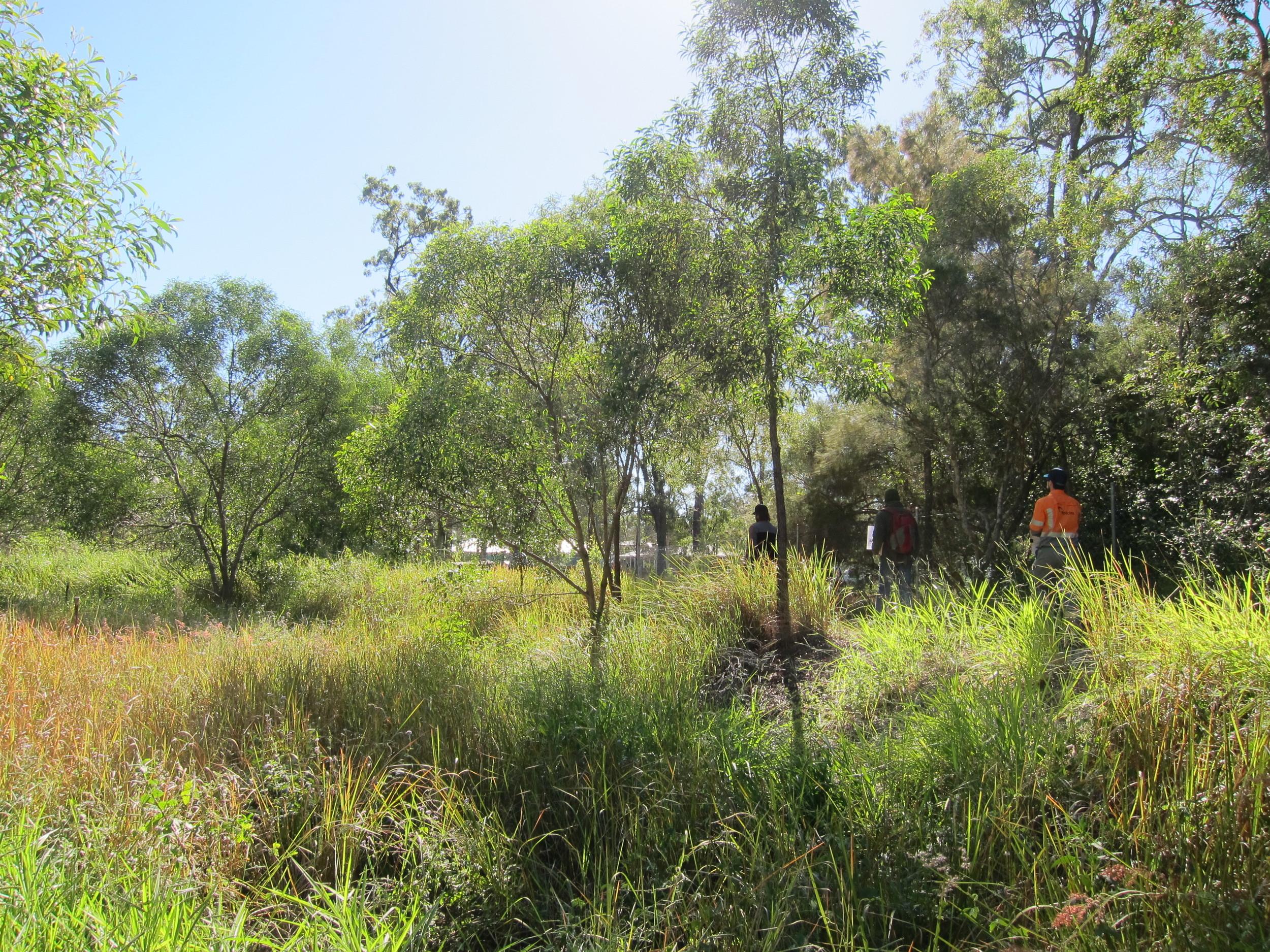 Wakerley Bioretention System