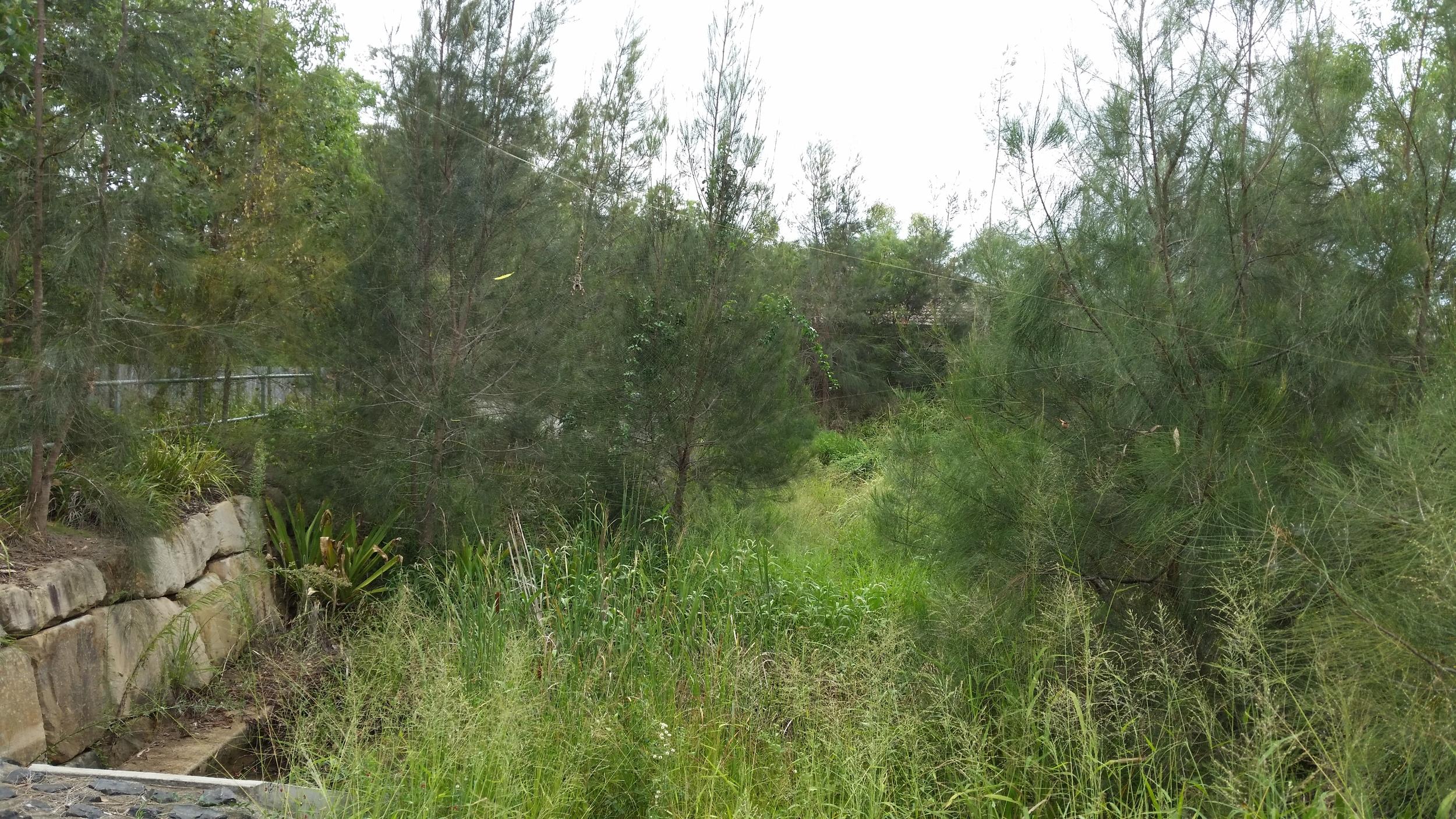 White Oak Place Bioretention System