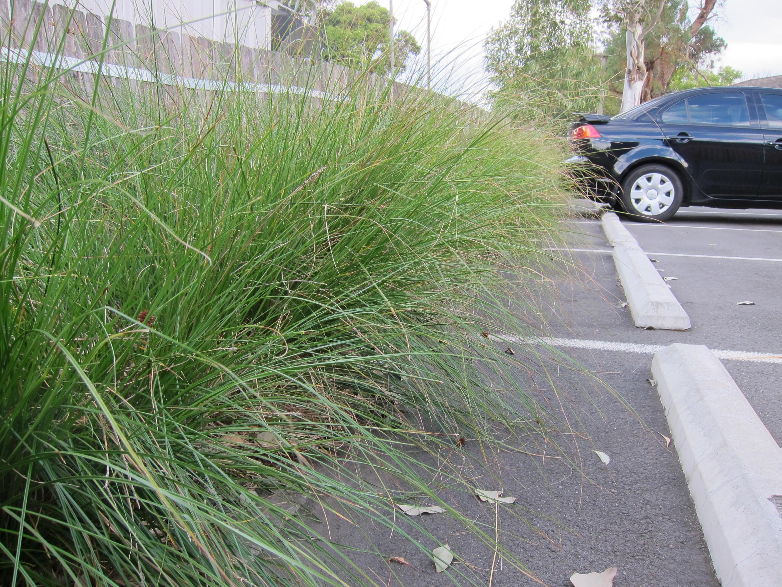 Parkside Drive Bioretention System