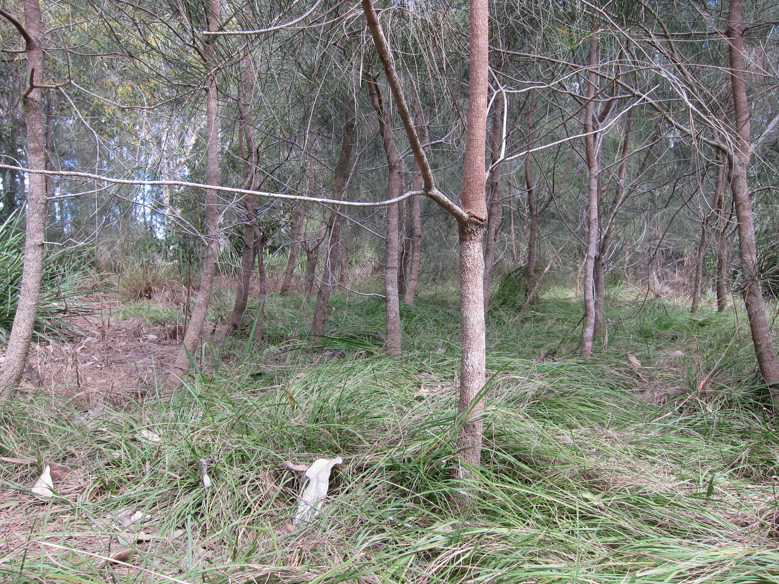 Boambillee Drive Bioretention System