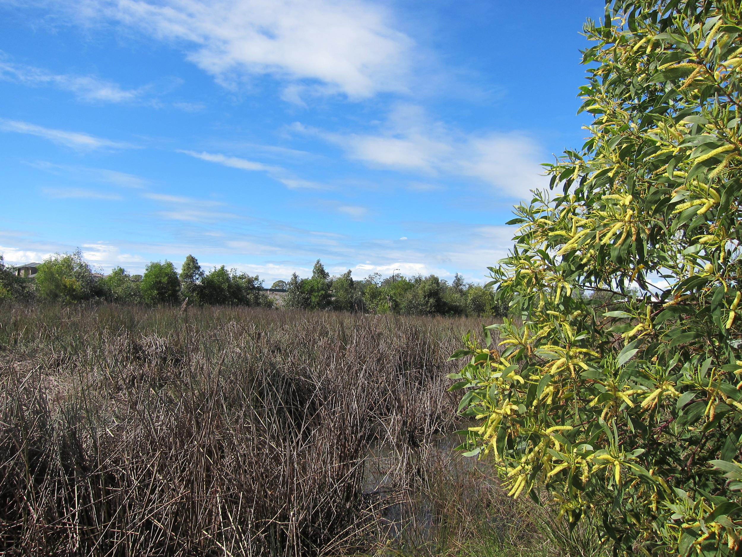 Moondarra St Wetland