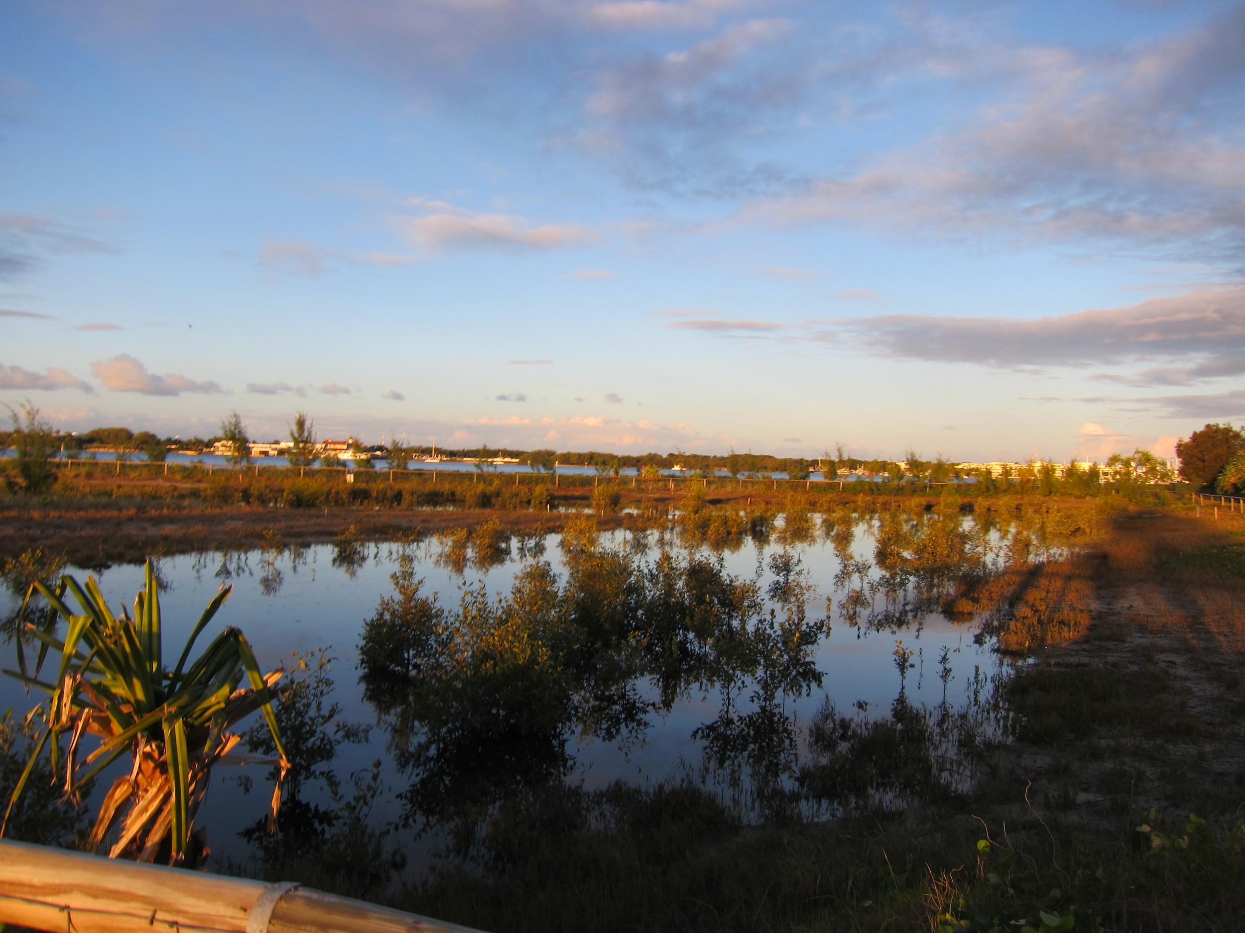 Southport Broadwater Parklands Mangrove Wetland