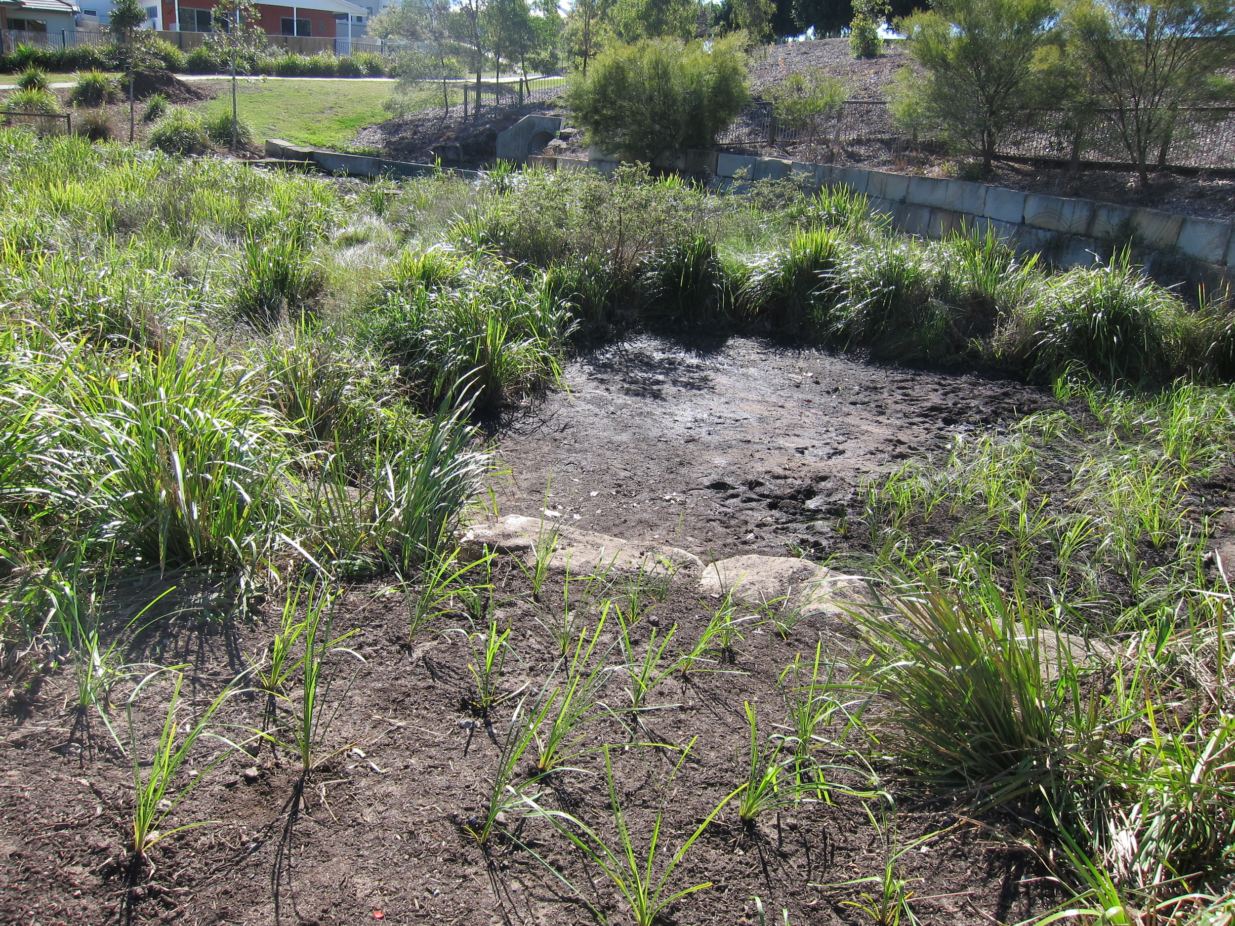 Riverine Drive Bioretention System