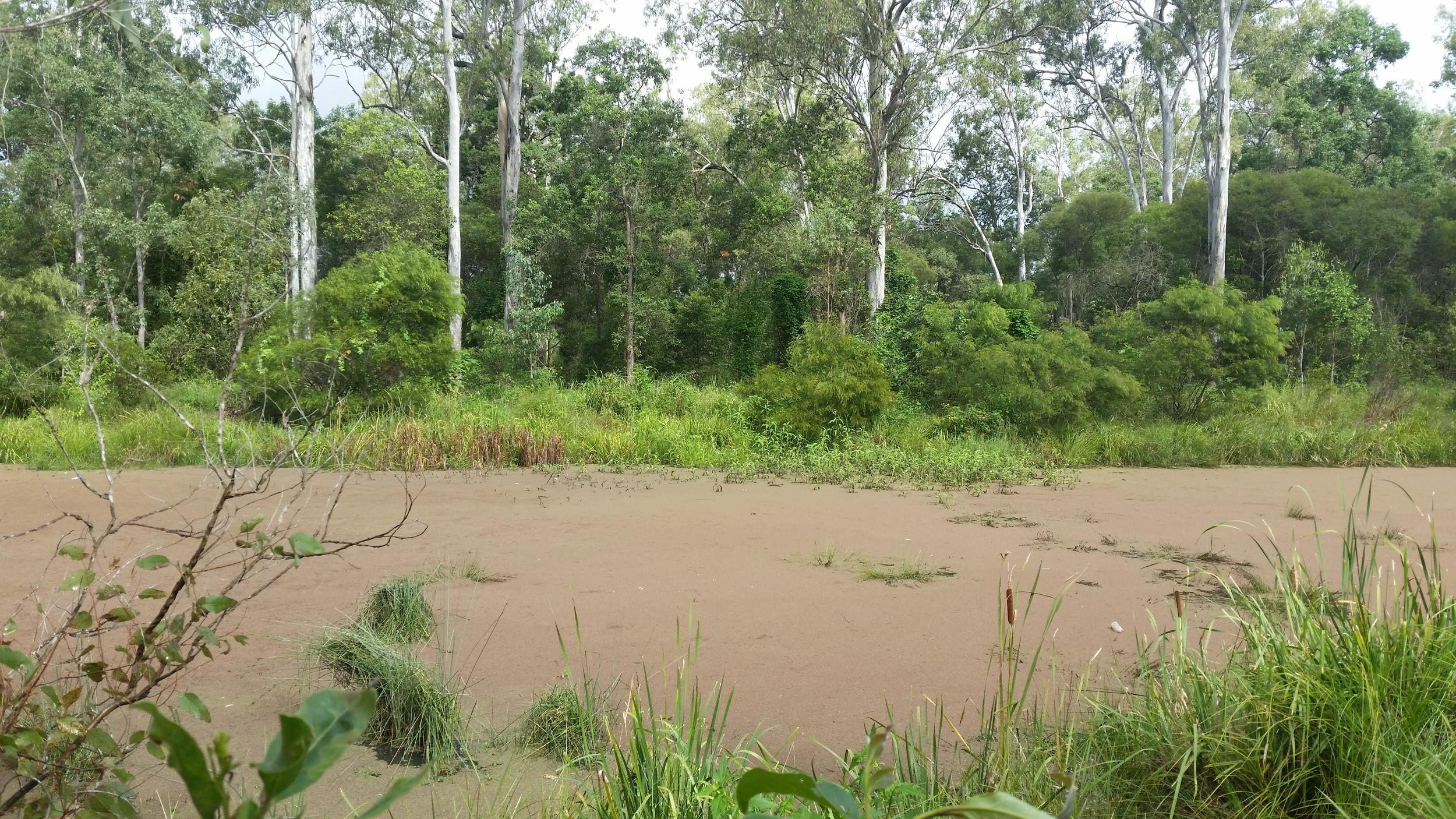 Cardena Drive Wetland