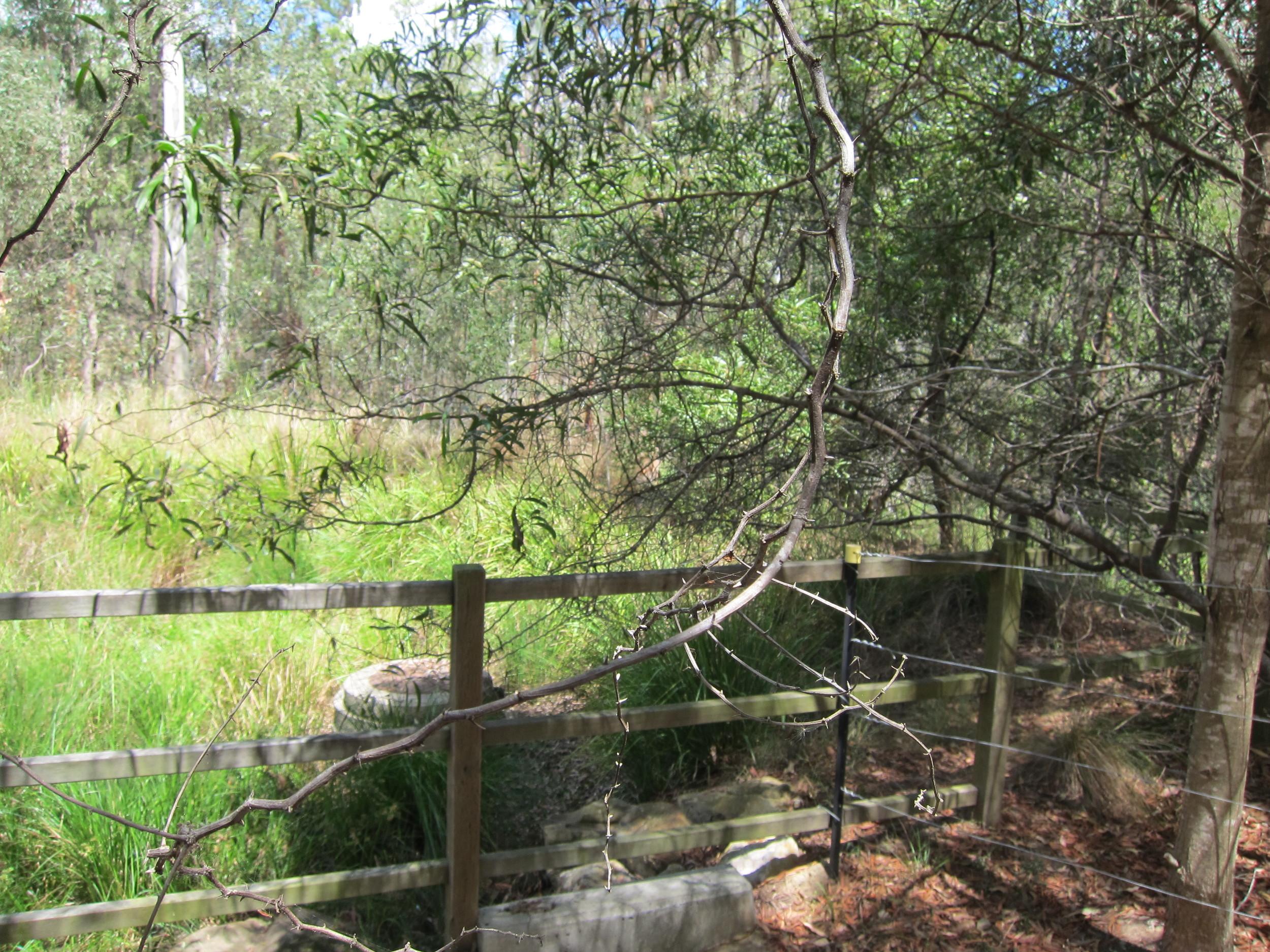 Lakeside Avenue Bioretention System