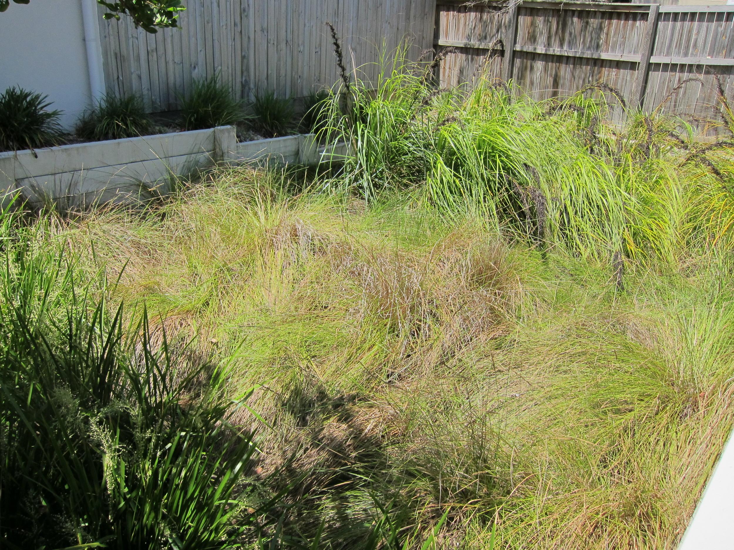 River Hills Road Bioretention