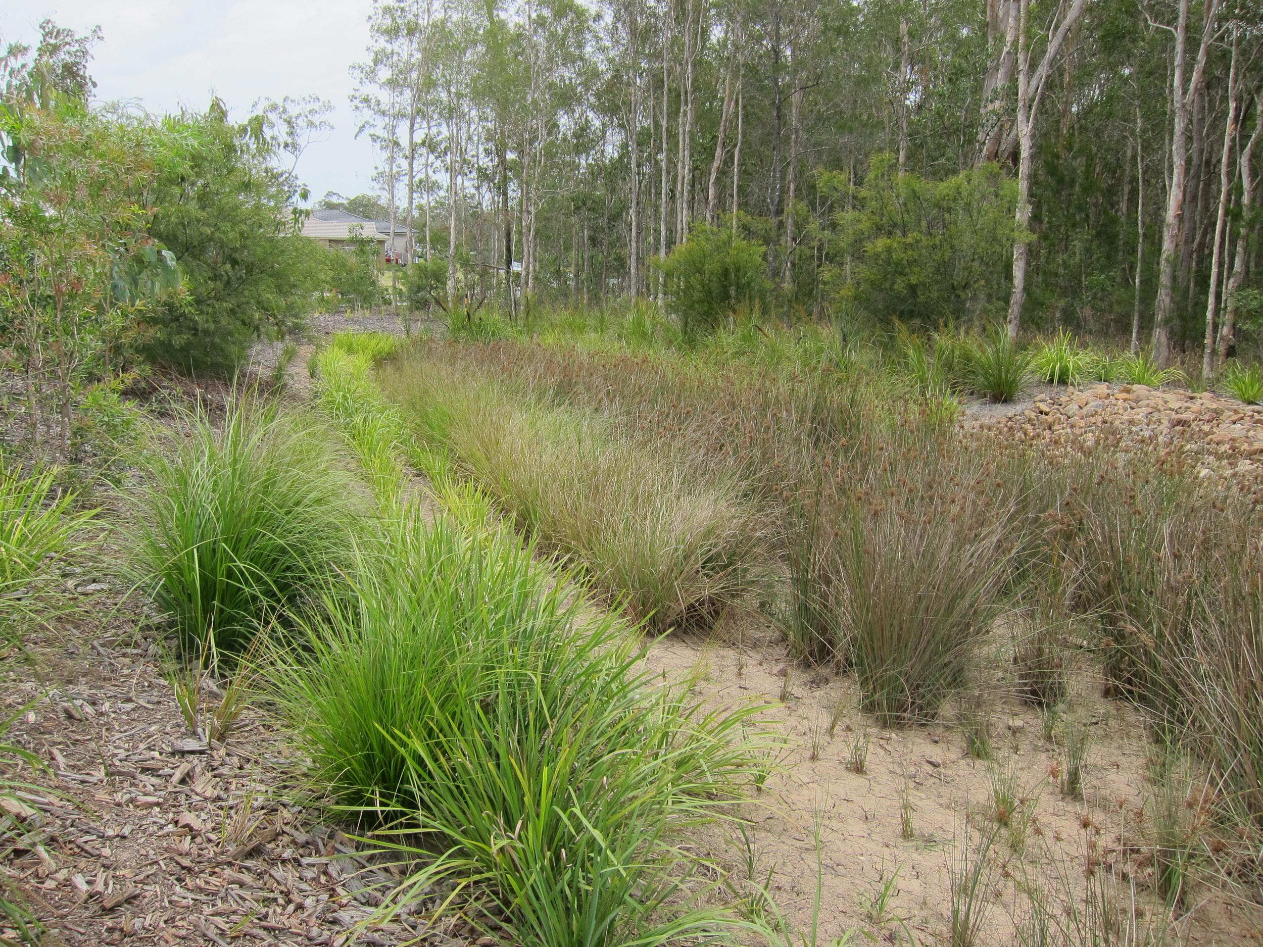 Autumnwood Avenue Bioretention System