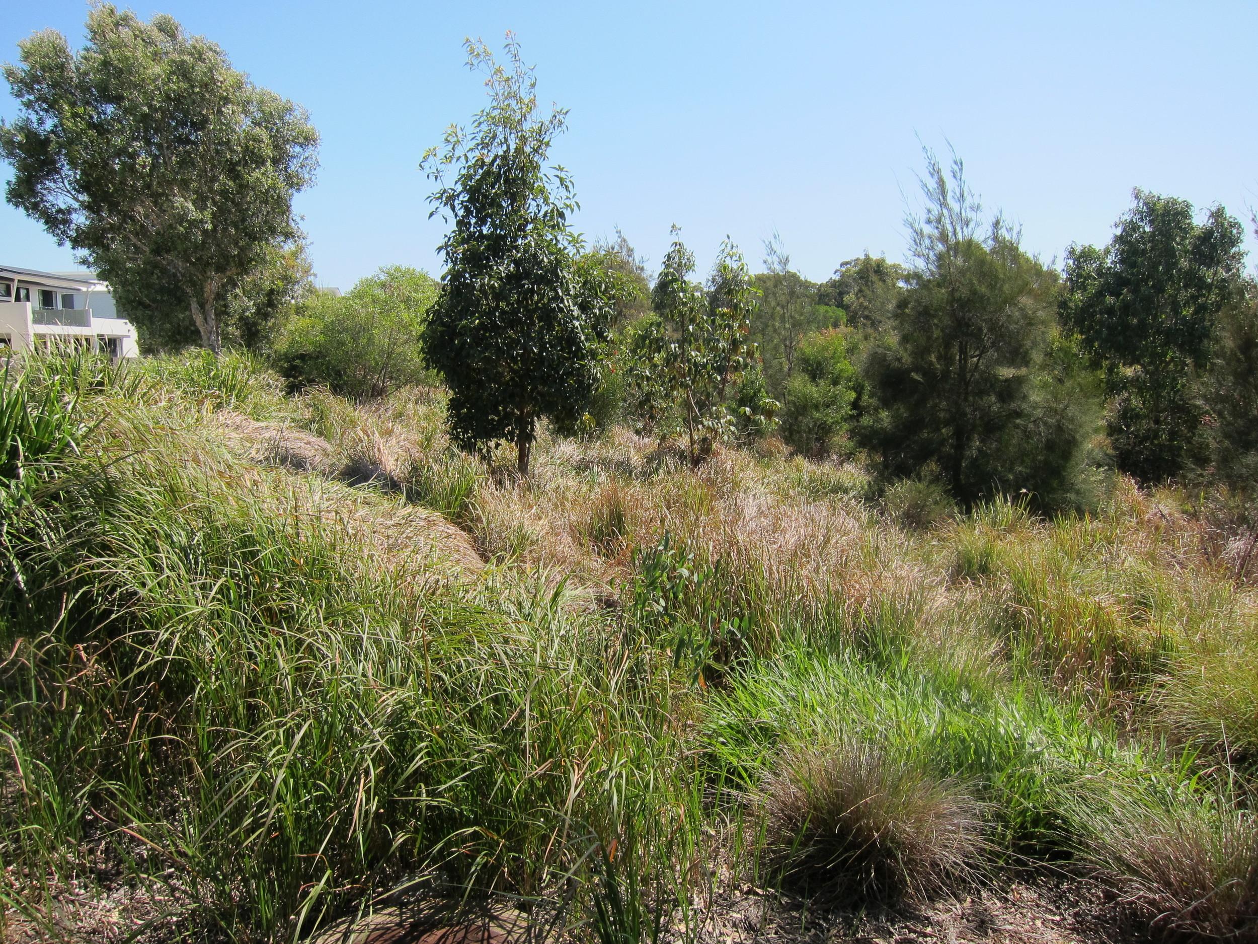 George Thorn Drive Wetland