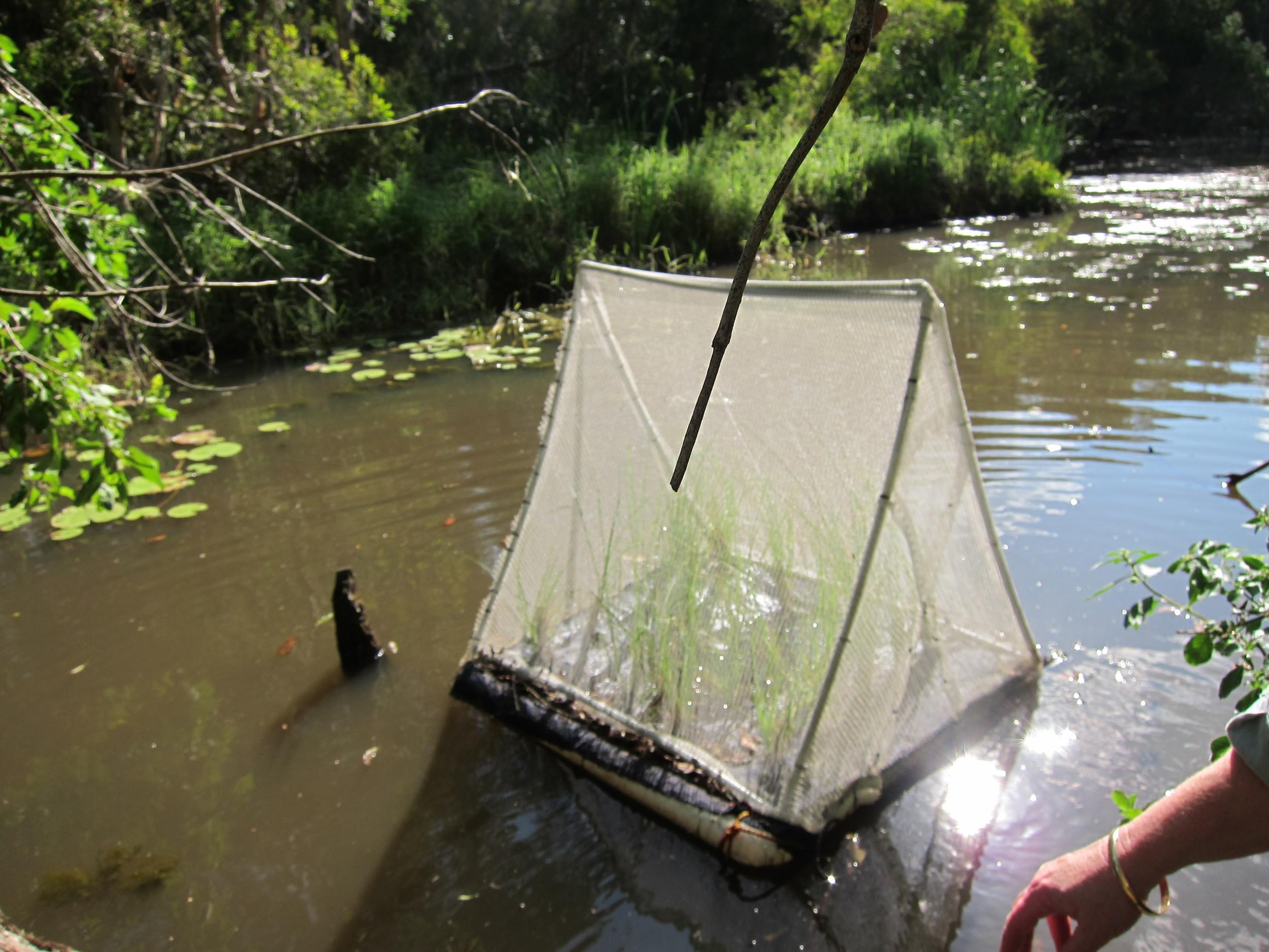 Indigiscapes Miniature Floating Wetland