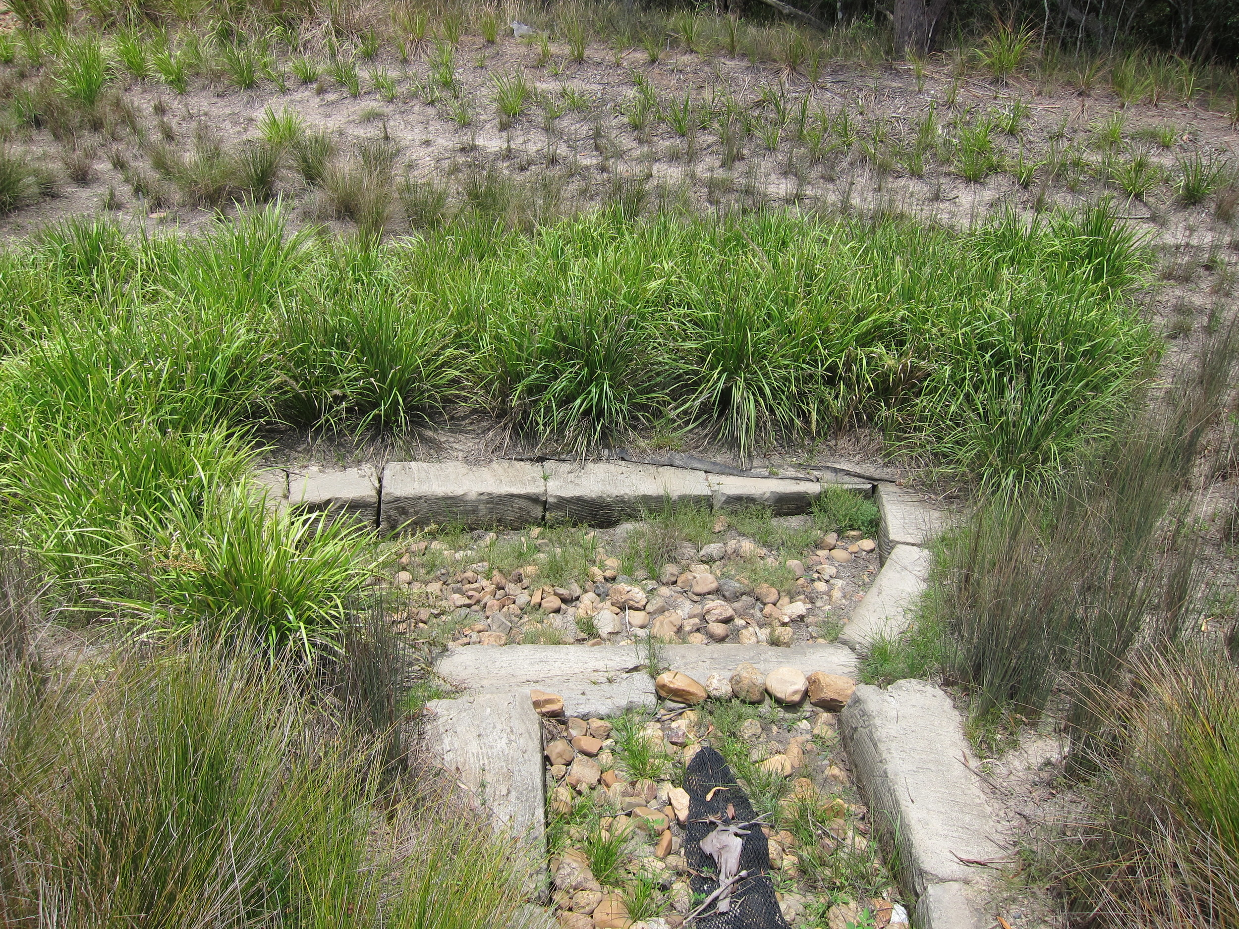 Peart Parade Bioretention System