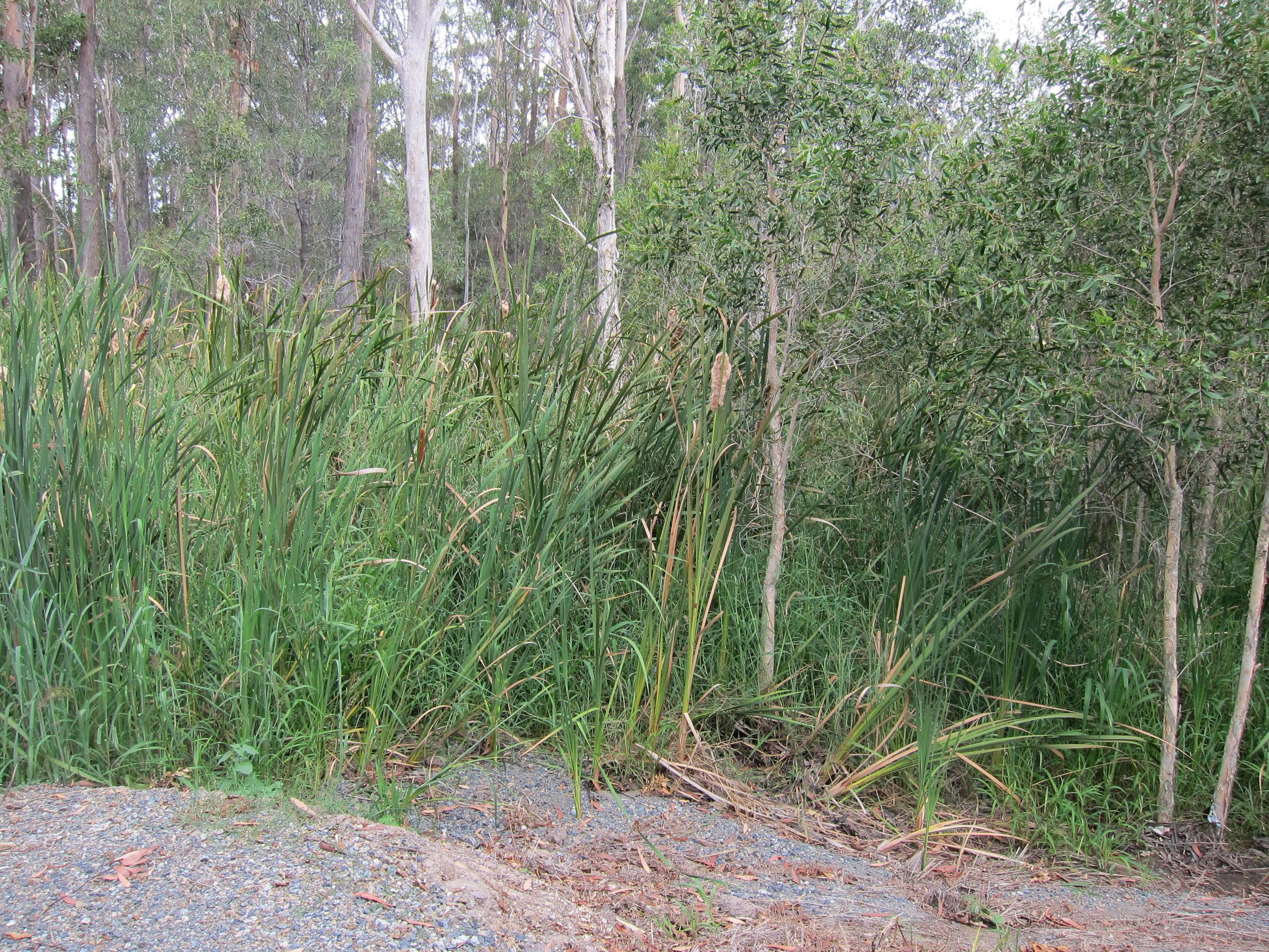 Valley Way Bioretention System