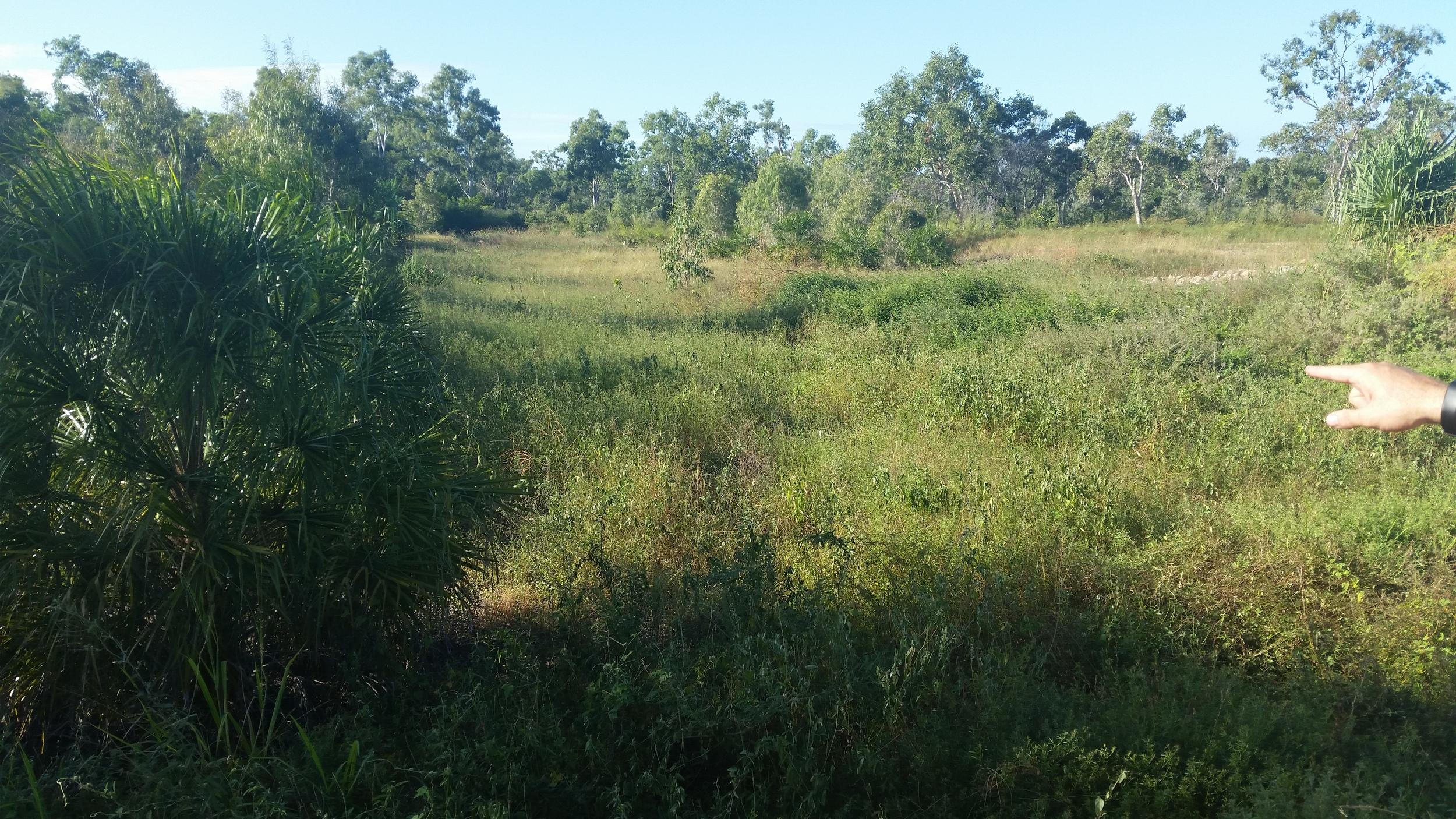 Ashmore Crescent Bioretention System