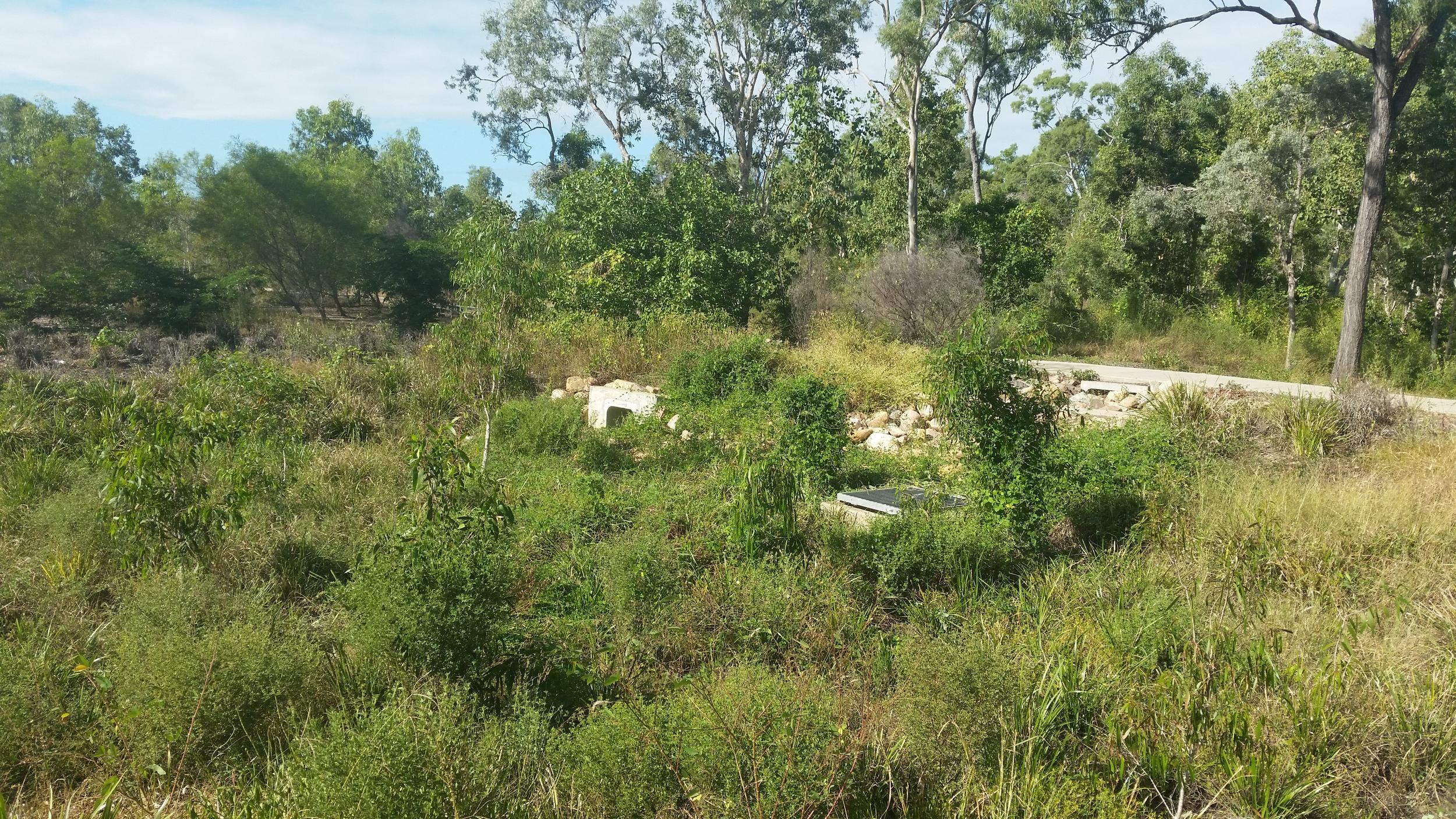 Yalbira Avenue Bioretention System