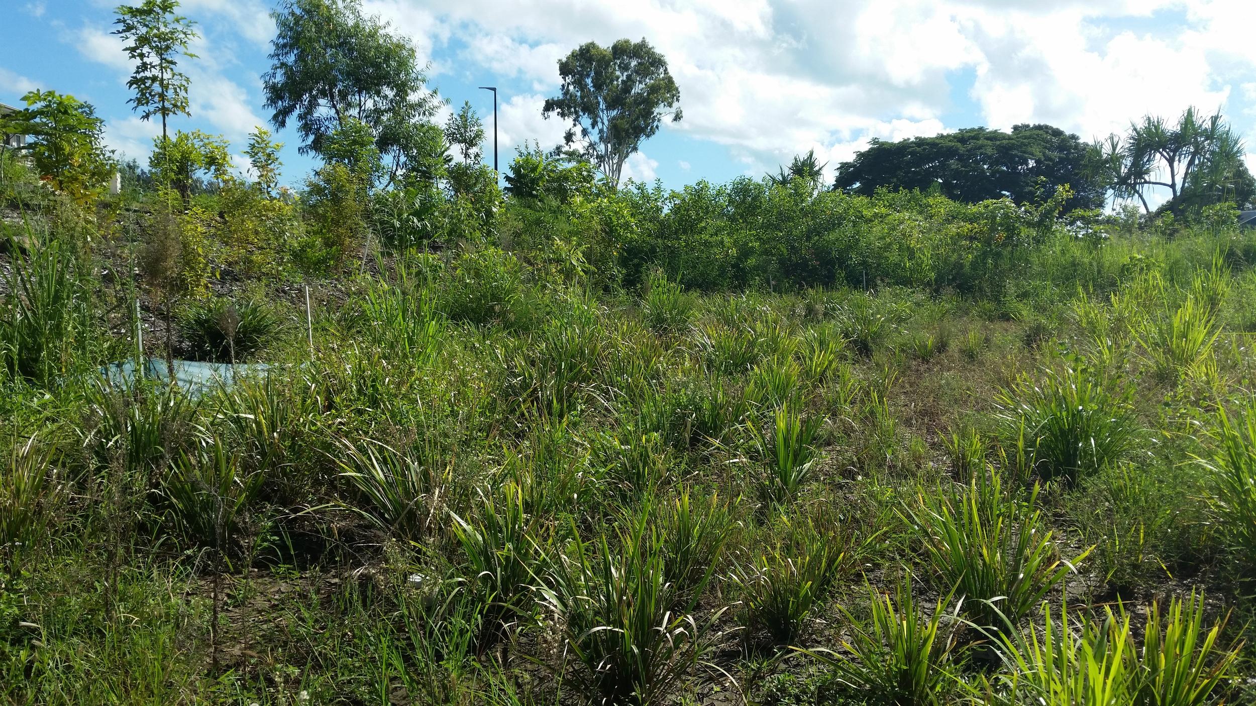 Regatta Waters Bioretention System